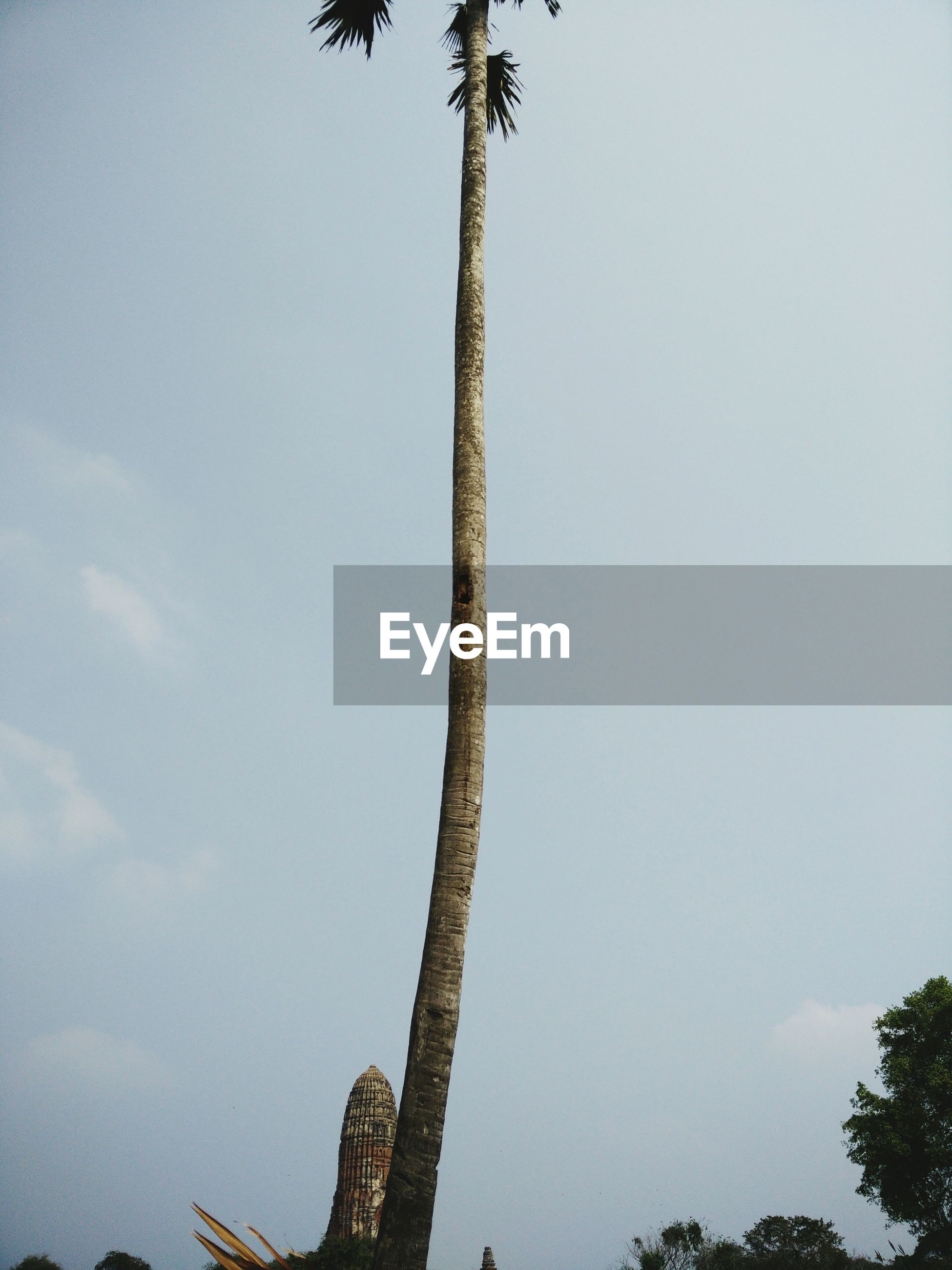 low angle view, tree, clear sky, growth, sky, nature, tree trunk, branch, tranquility, palm tree, copy space, day, beauty in nature, outdoors, no people, silhouette, high section, plant, tall - high, growing