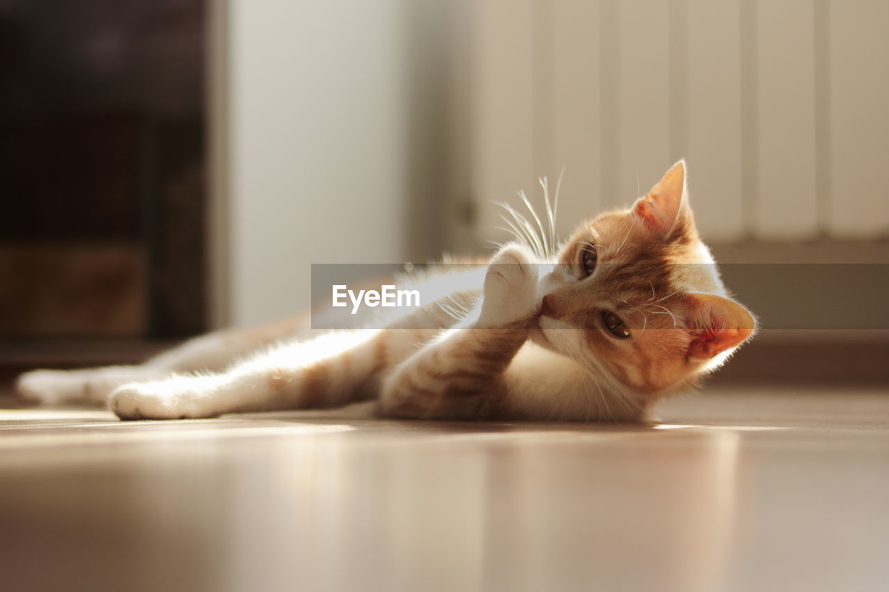 Close-up of cat lying on floor at home