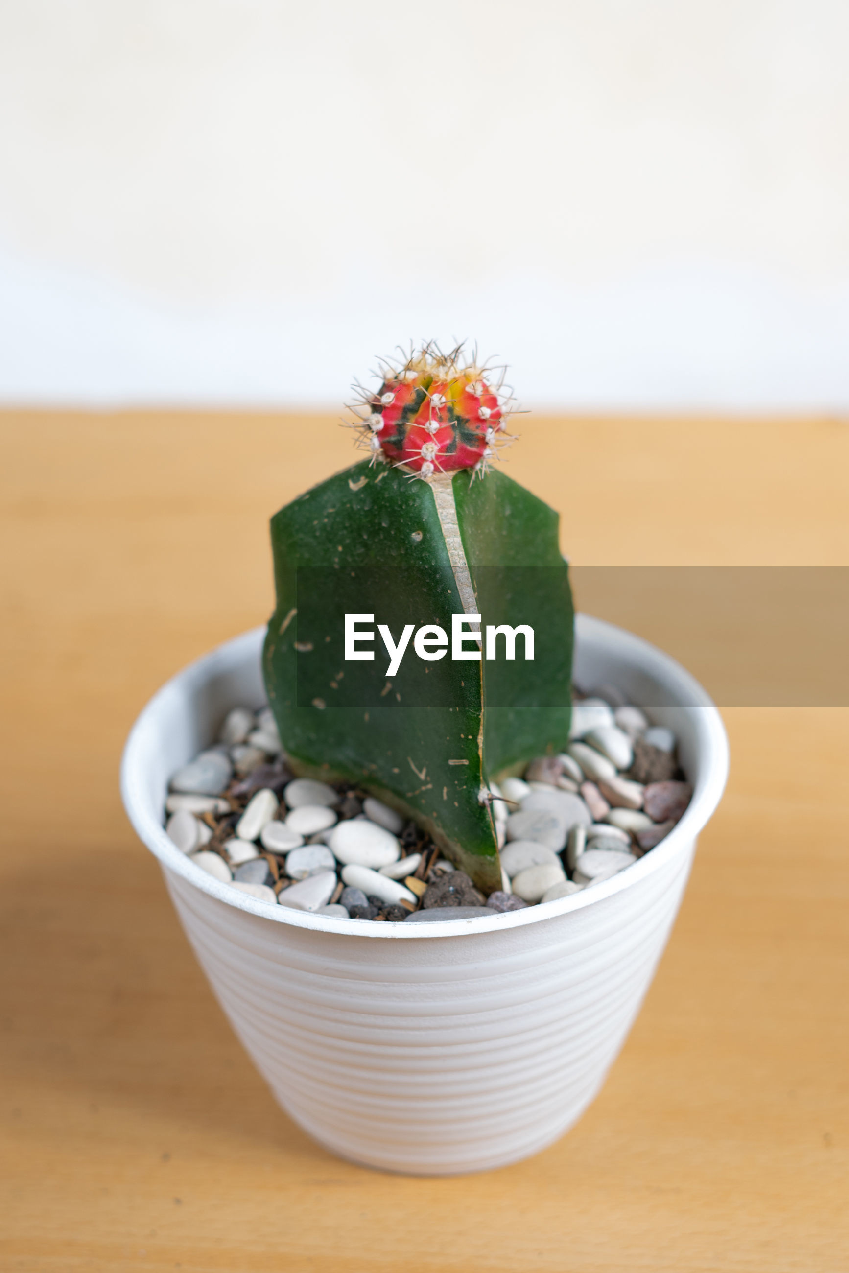 CLOSE-UP OF SUCCULENT PLANT IN BOWL