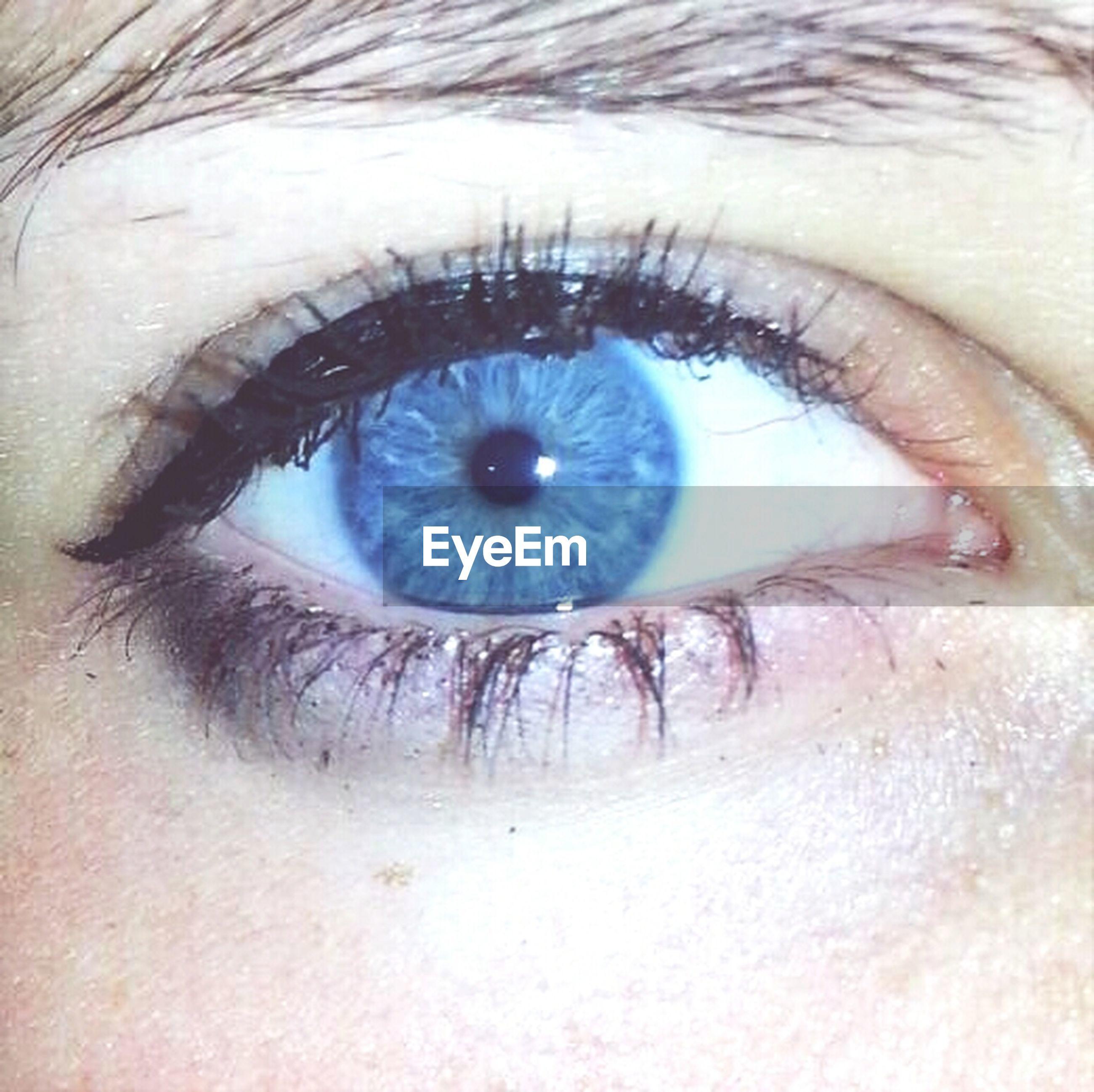 human eye, eyesight, eyelash, close-up, sensory perception, part of, iris - eye, eyeball, extreme close-up, human skin, extreme close up, full frame, unrecognizable person, looking at camera, portrait, circle, vision