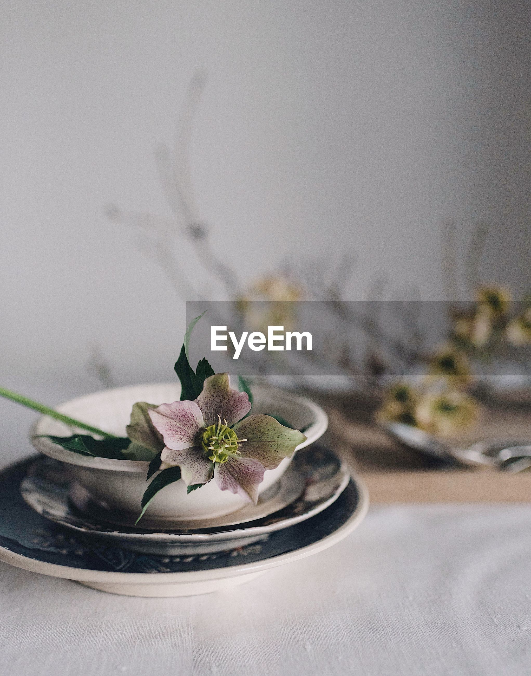 Close-up of flower in bowl on table at home