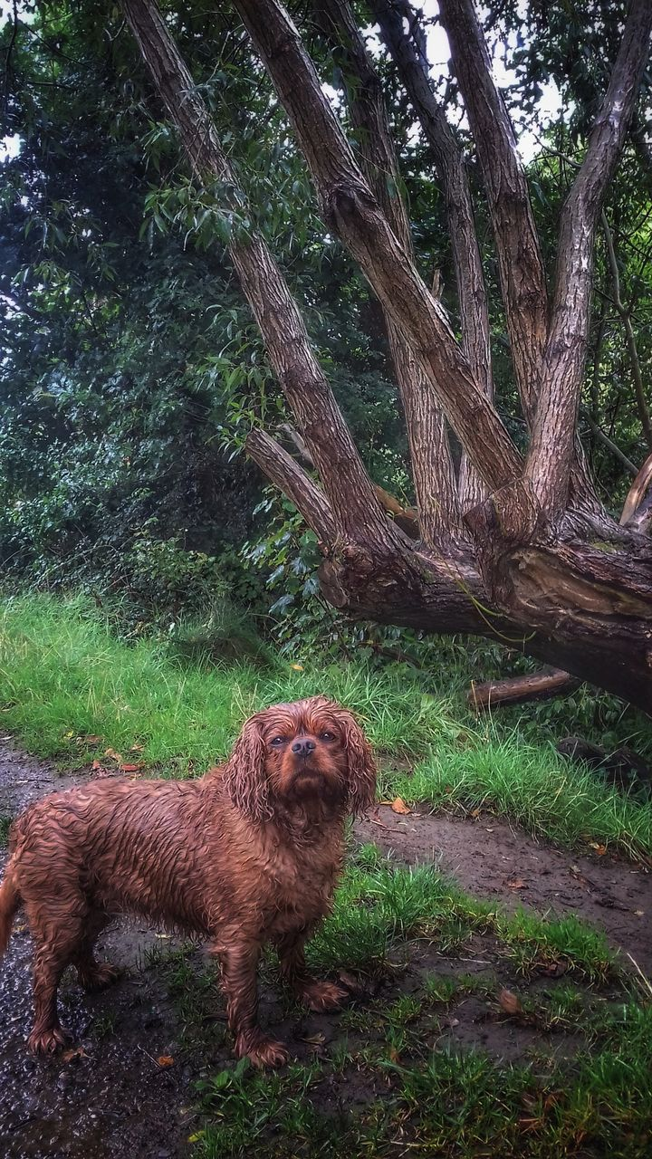 dog, tree, one animal, mammal, domestic animals, animal themes, pets, nature, field, grass, tree trunk, no people, day, outdoors, growth, beauty in nature