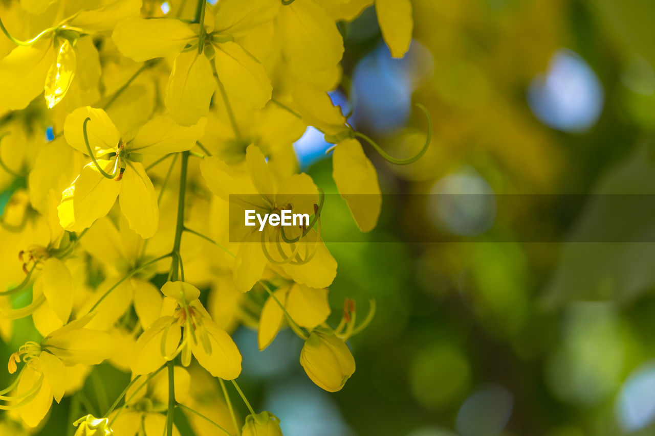 plant, flower, flowering plant, growth, yellow, beauty in nature, fragility, vulnerability, close-up, freshness, focus on foreground, day, no people, nature, petal, flower head, selective focus, animal wildlife, inflorescence, animal themes, outdoors, pollination