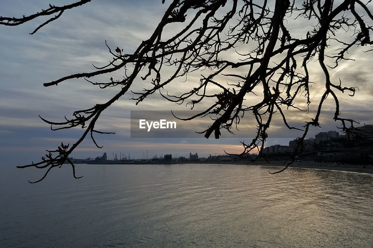 water, sky, nature, tree, beauty in nature, tranquility, tranquil scene, branch, bare tree, waterfront, outdoors, scenics, no people, sea, cloud - sky, day, horizon over water, dead tree