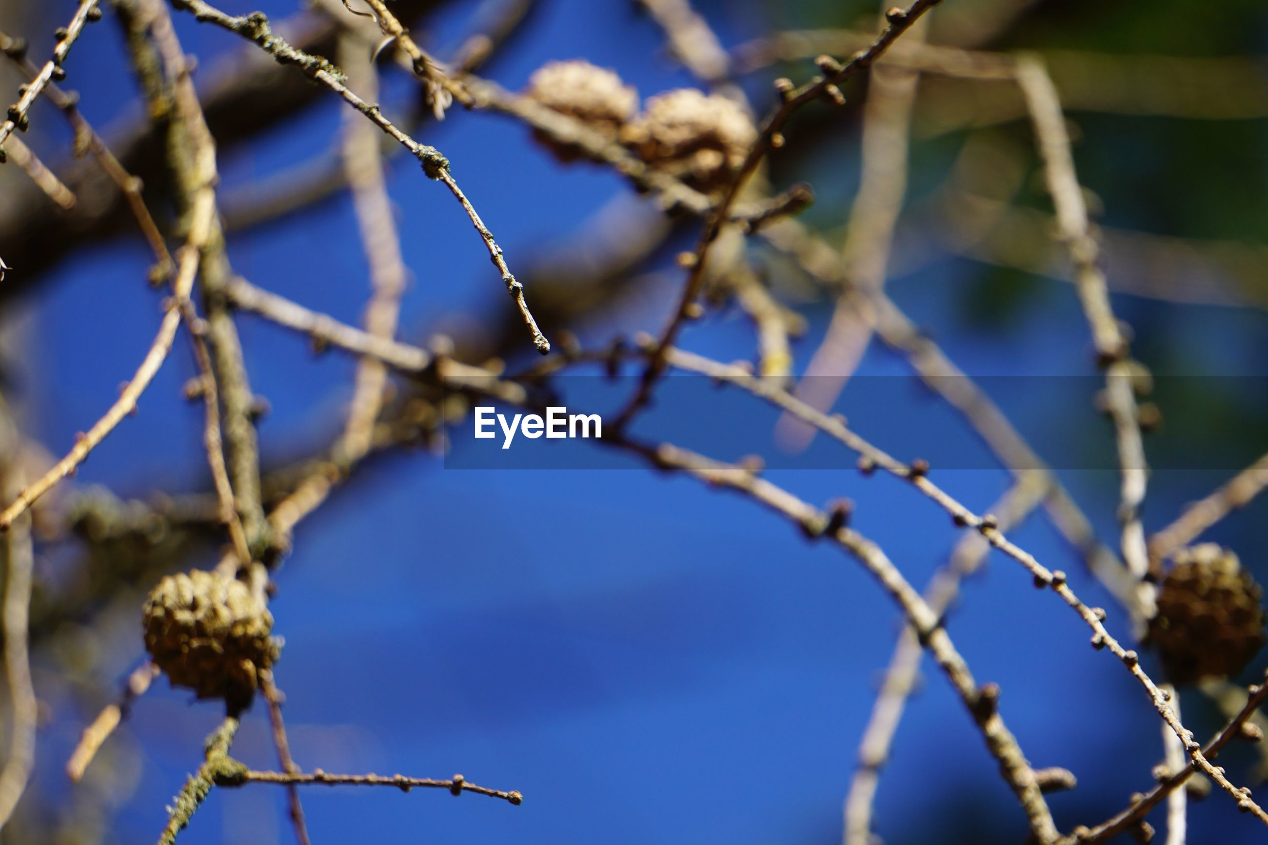 LOW ANGLE VIEW OF FLOWERING PLANT ON BRANCH AGAINST BLUE SKY