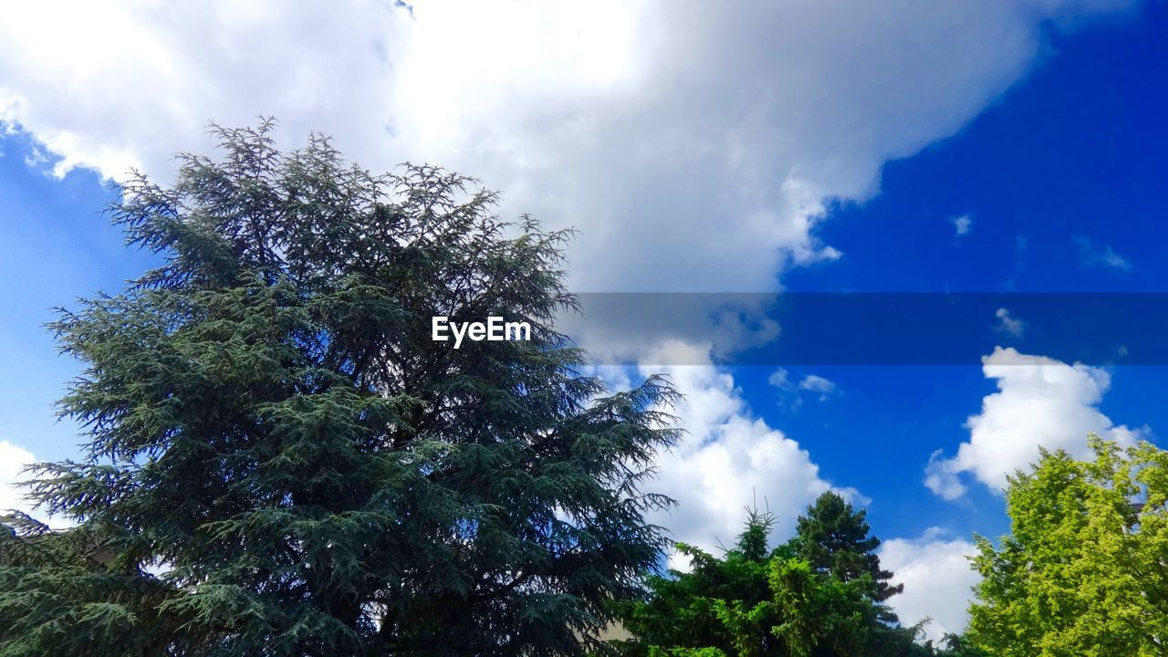 tree, sky, low angle view, nature, cloud - sky, growth, beauty in nature, day, tranquility, scenics, no people, outdoors, tranquil scene, blue, forest