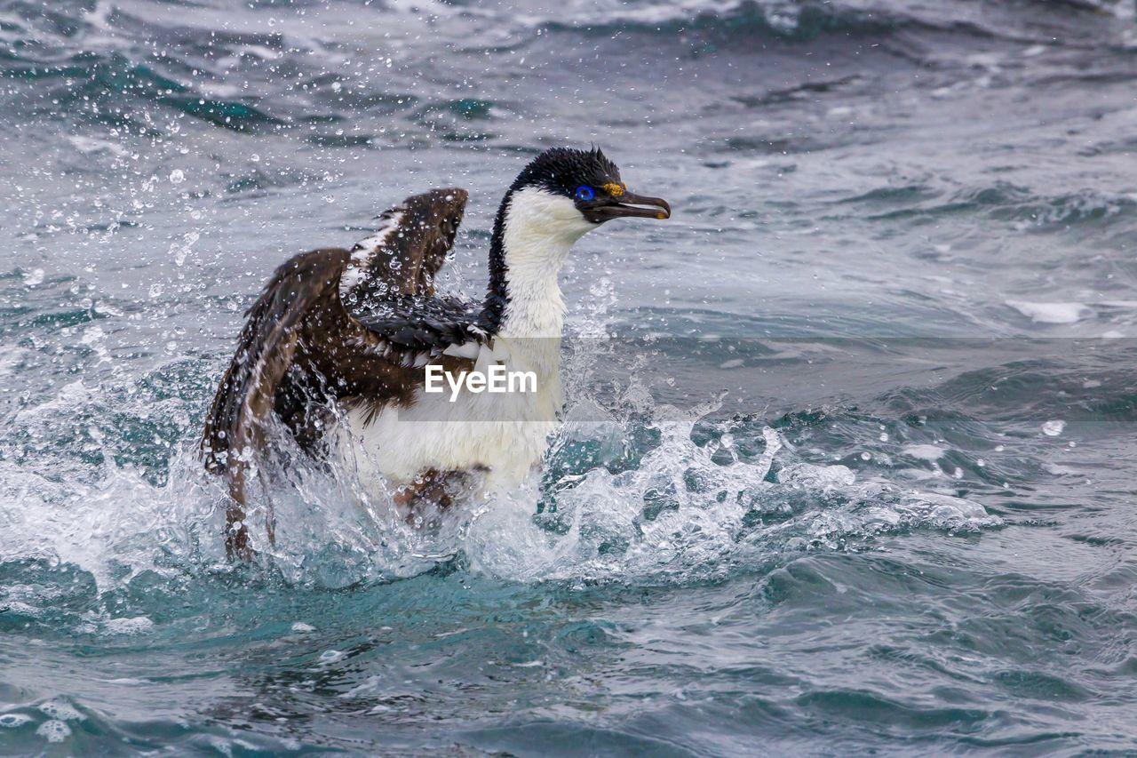 Bird Swimming In Sea