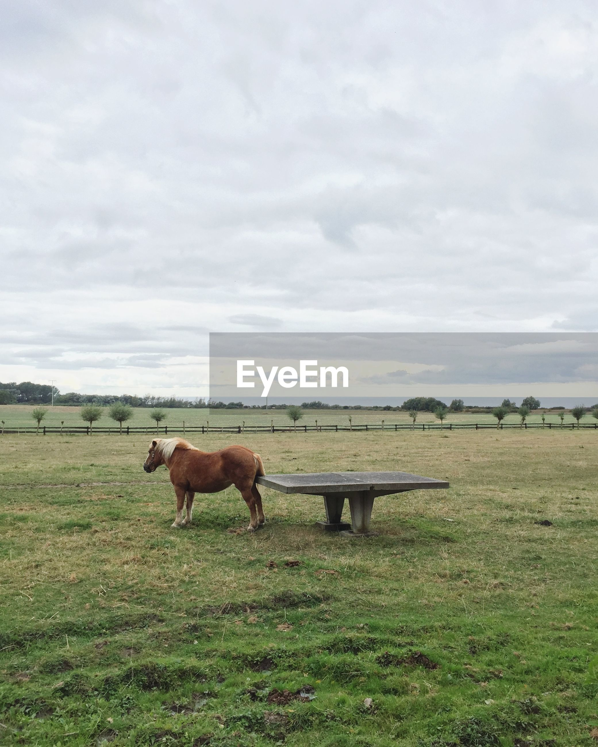 Horses standing by bench on grassy field against cloudy sky