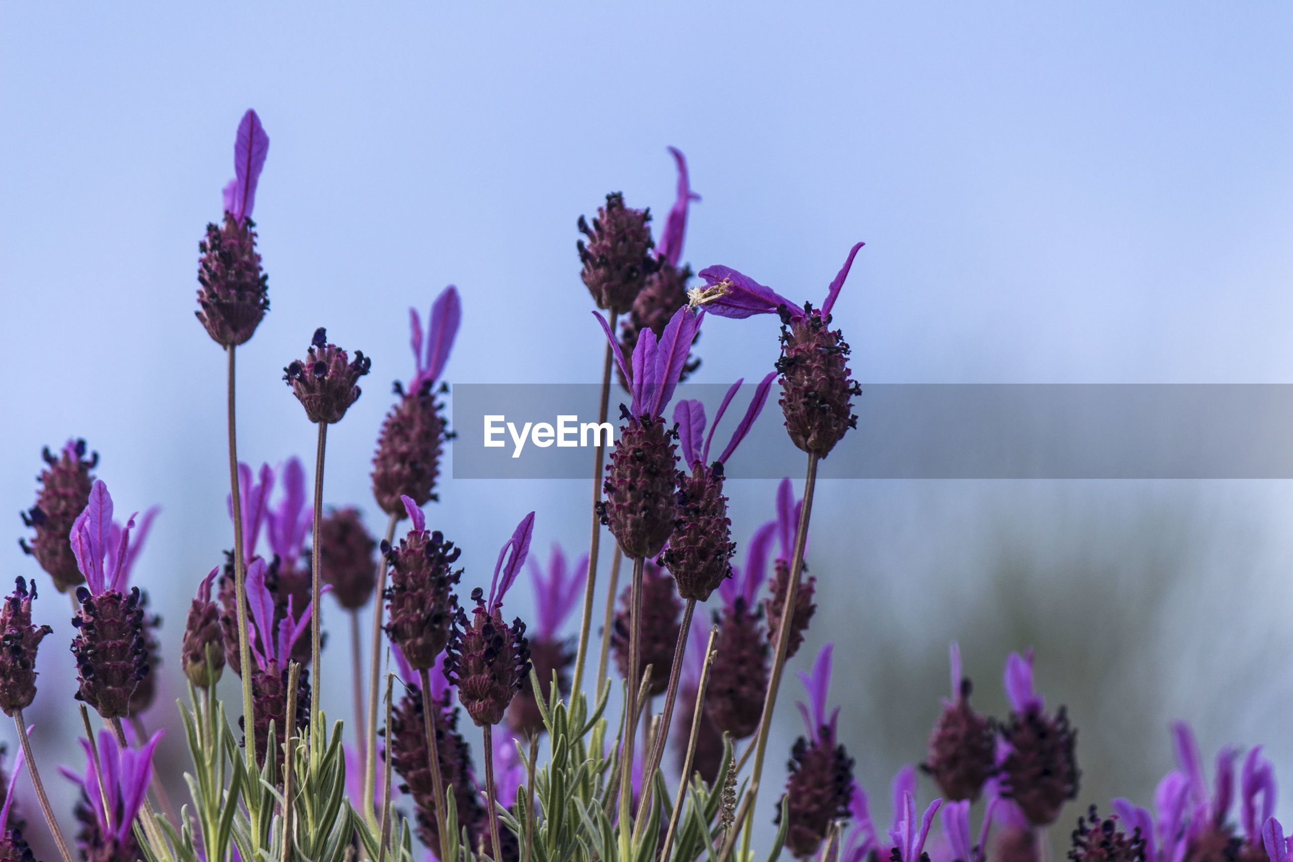 PURPLE FLOWERING PLANTS AGAINST SKY
