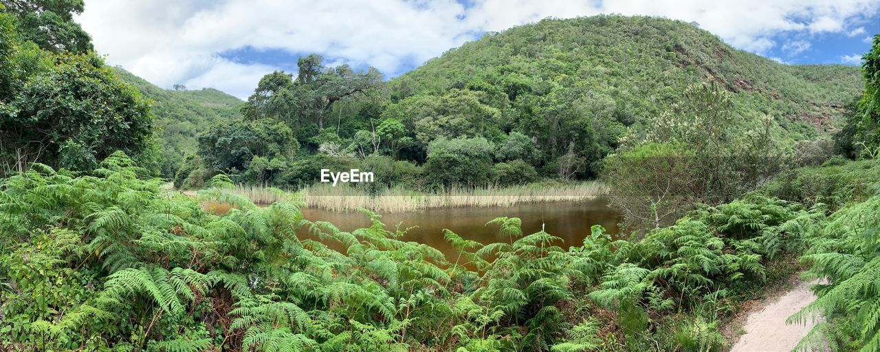 plant, tree, growth, beauty in nature, green color, tranquility, scenics - nature, tranquil scene, cloud - sky, nature, sky, water, no people, mountain, non-urban scene, day, lush foliage, foliage, land, outdoors, rainforest