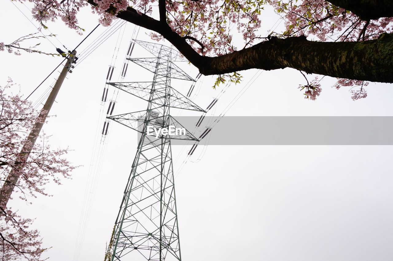 tree, cable, low angle view, electricity pylon, power supply, electricity, fuel and power generation, power line, day, connection, outdoors, growth, branch, nature, no people, sky, clear sky, beauty in nature