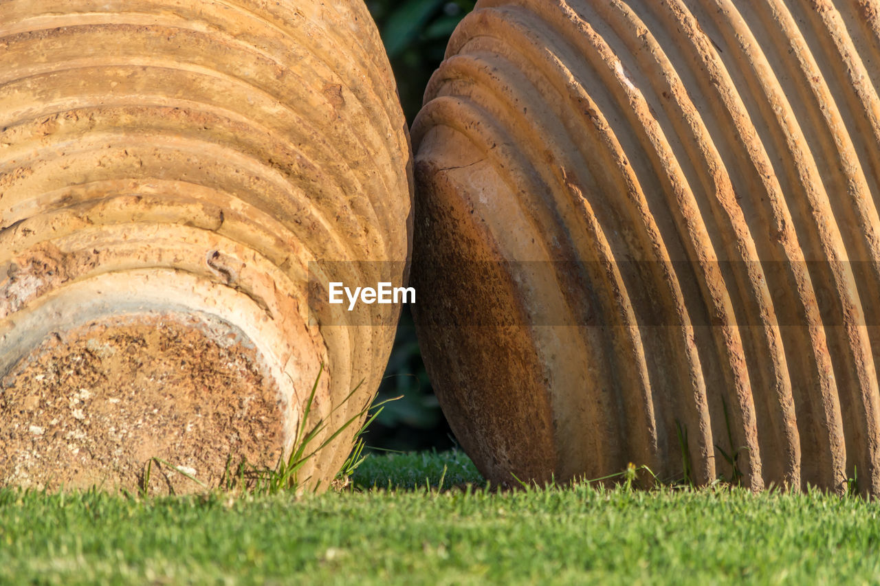 close-up, day, no people, grass, land, field, plant, focus on foreground, still life, nature, outdoors, food and drink, two objects, brown, pattern, selective focus, agriculture, sunlight, freshness, tree