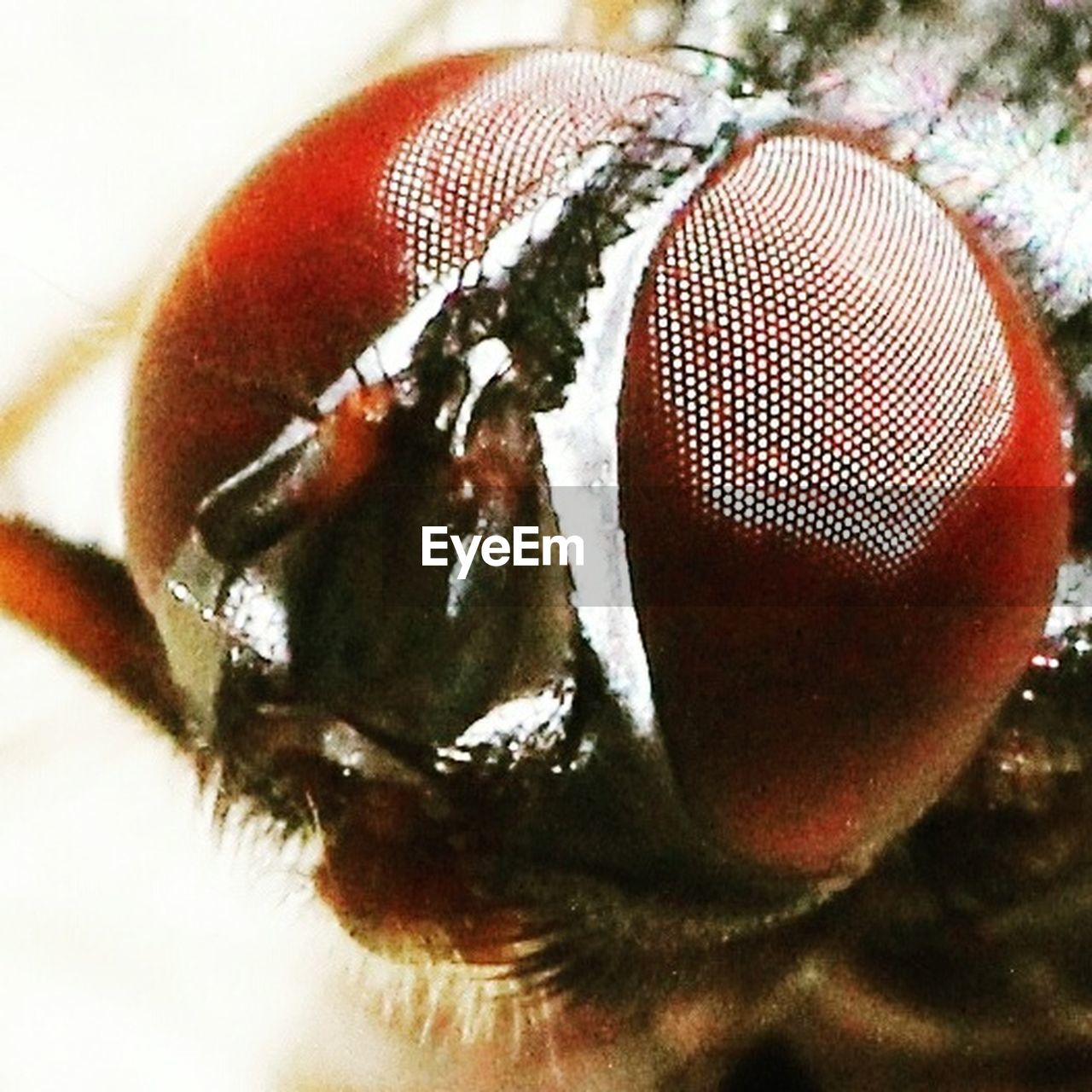 one animal, animal themes, close-up, insect, wildlife, animals in the wild, macro, no people, housefly, nature, day, indoors