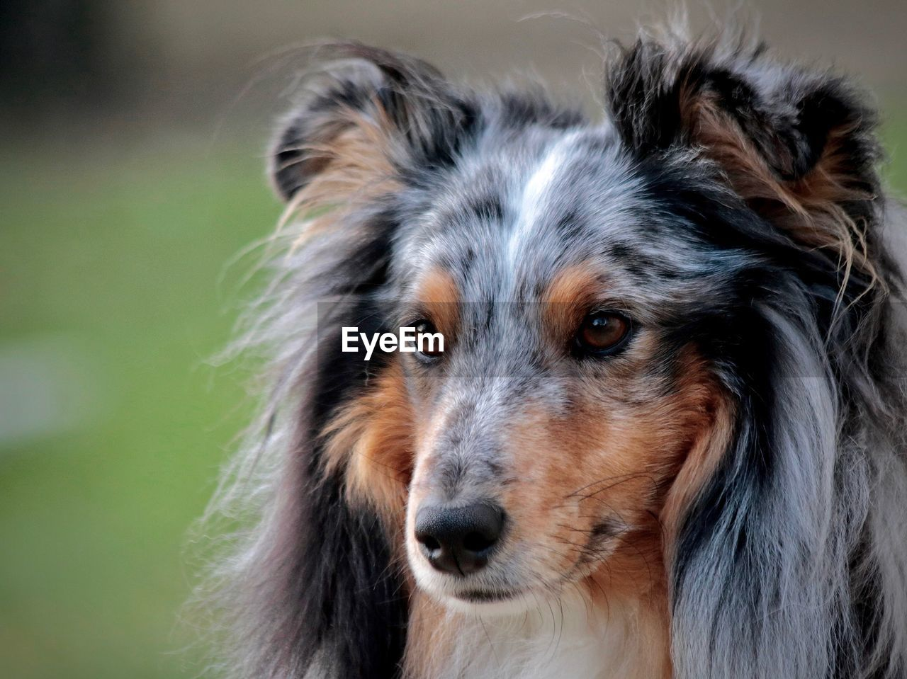 dog, canine, mammal, domestic, one animal, pets, animal, animal themes, domestic animals, animal body part, close-up, animal head, portrait, vertebrate, focus on foreground, no people, looking, looking at camera, animal hair, animal mouth, animal eye, snout, whisker, animal nose