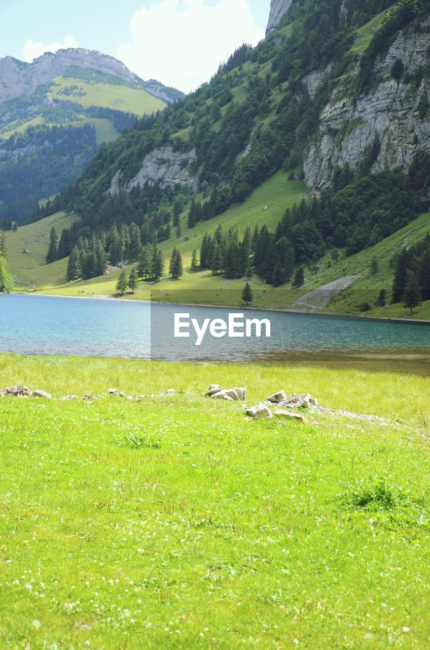 SCENIC VIEW OF GREEN LANDSCAPE AND LAKE