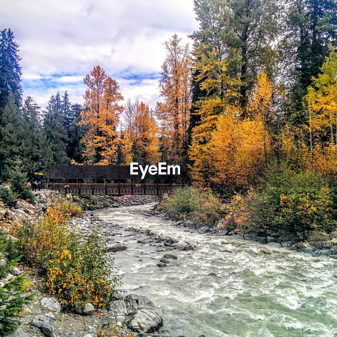River Flowing Amidst Autumn Trees