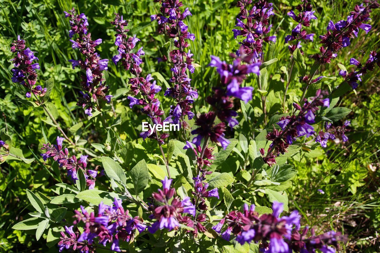 flowering plant, flower, plant, beauty in nature, growth, freshness, fragility, vulnerability, nature, plant part, purple, leaf, no people, day, green color, outdoors, botany, full frame, petal, garden, flower head, spring, flowerbed
