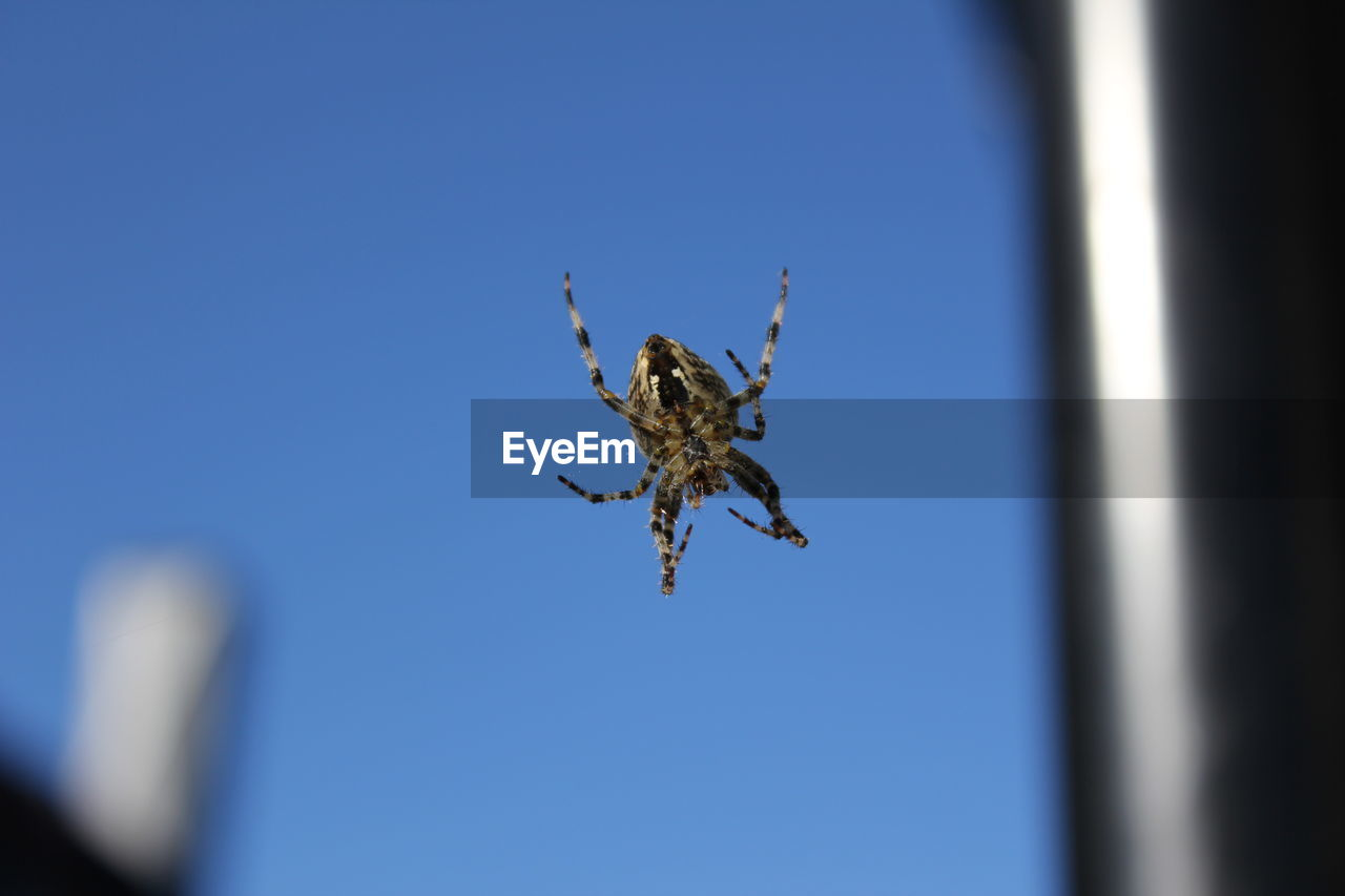 Close-Up Of Spider On Glass Window