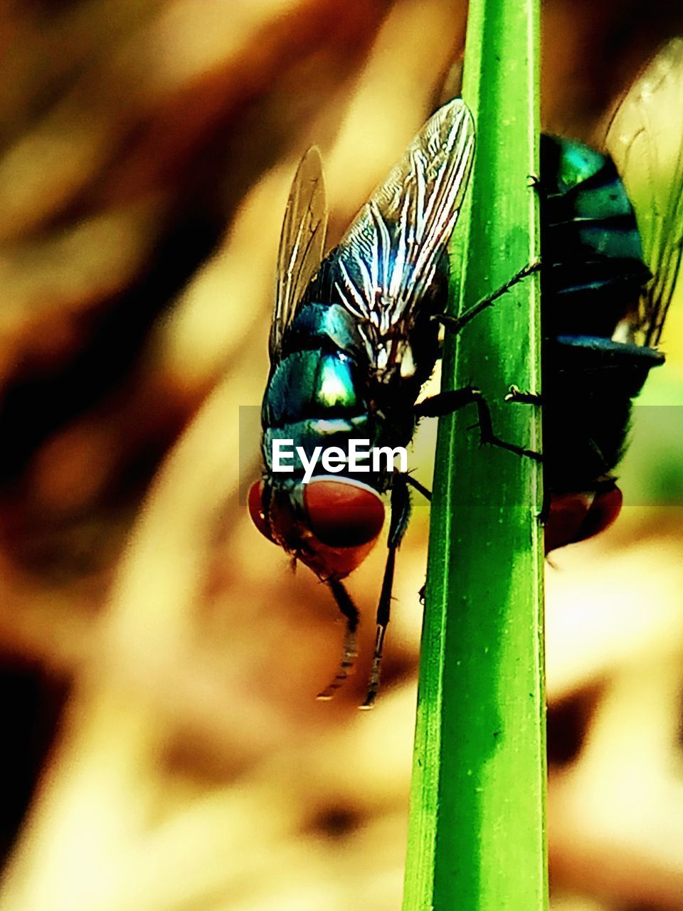 animal themes, insect, animals in the wild, animal wildlife, invertebrate, one animal, animal, close-up, green color, focus on foreground, no people, day, nature, plant, animal wing, outdoors, fly, beauty in nature, housefly, selective focus, animal eye