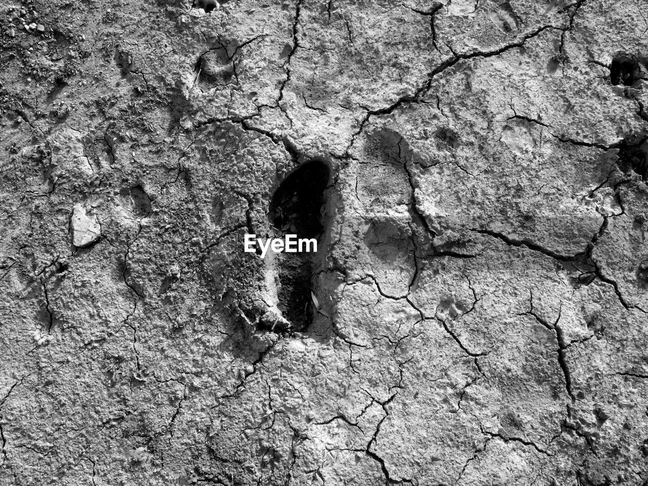 cracked, no people, day, textured, high angle view, outdoors, drought, full frame, close-up, nature, mammal