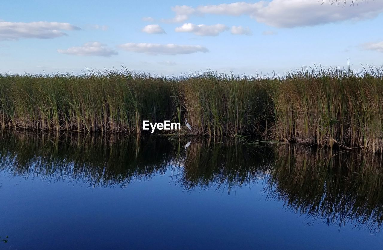 sky, reflection, water, tranquility, plant, tranquil scene, cloud - sky, growth, beauty in nature, scenics - nature, nature, grass, no people, day, lake, land, field, waterfront, non-urban scene, outdoors, swamp