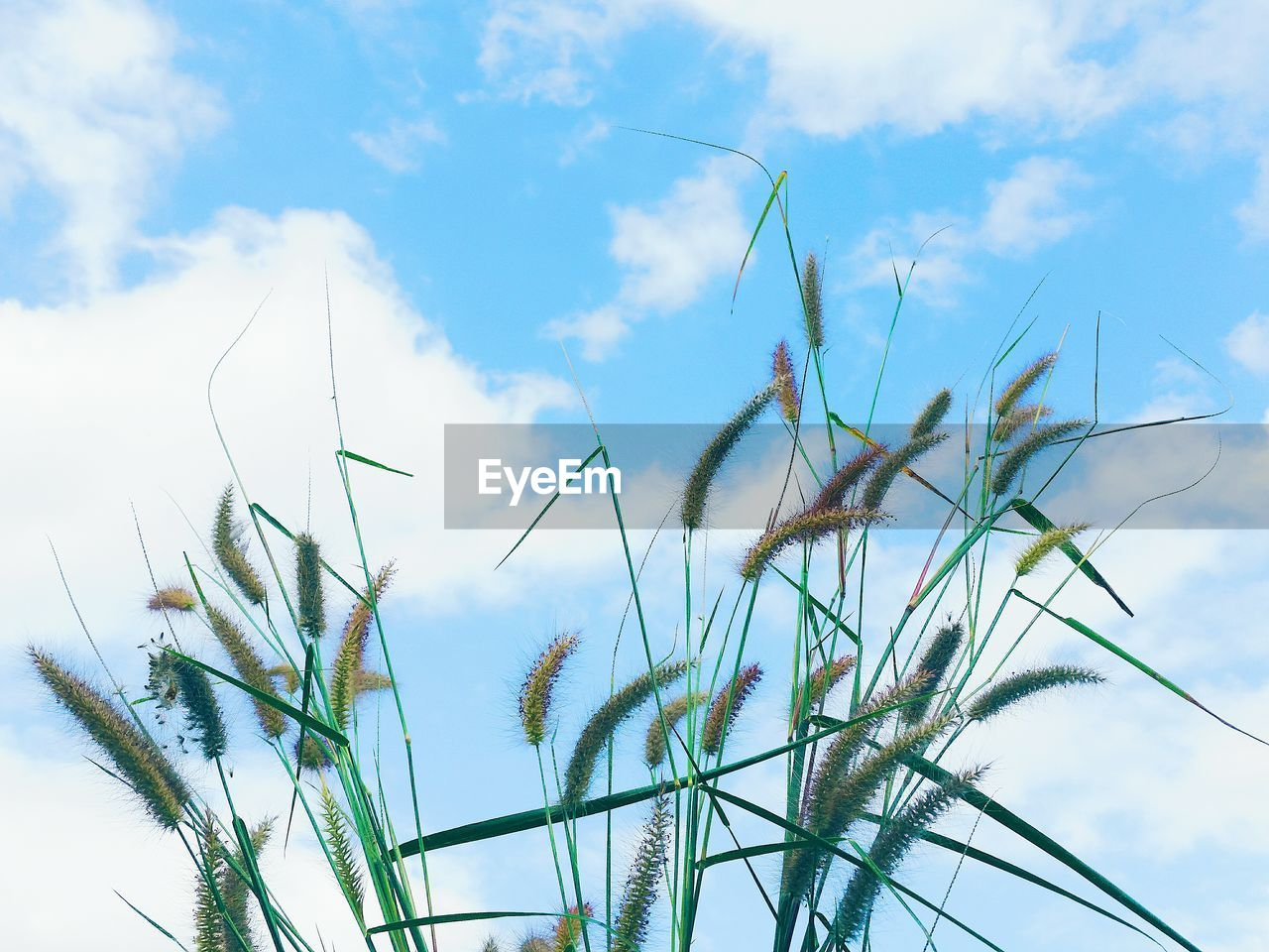 growth, sky, nature, plant, day, low angle view, beauty in nature, no people, outdoors, cloud - sky, tranquility, close-up, freshness