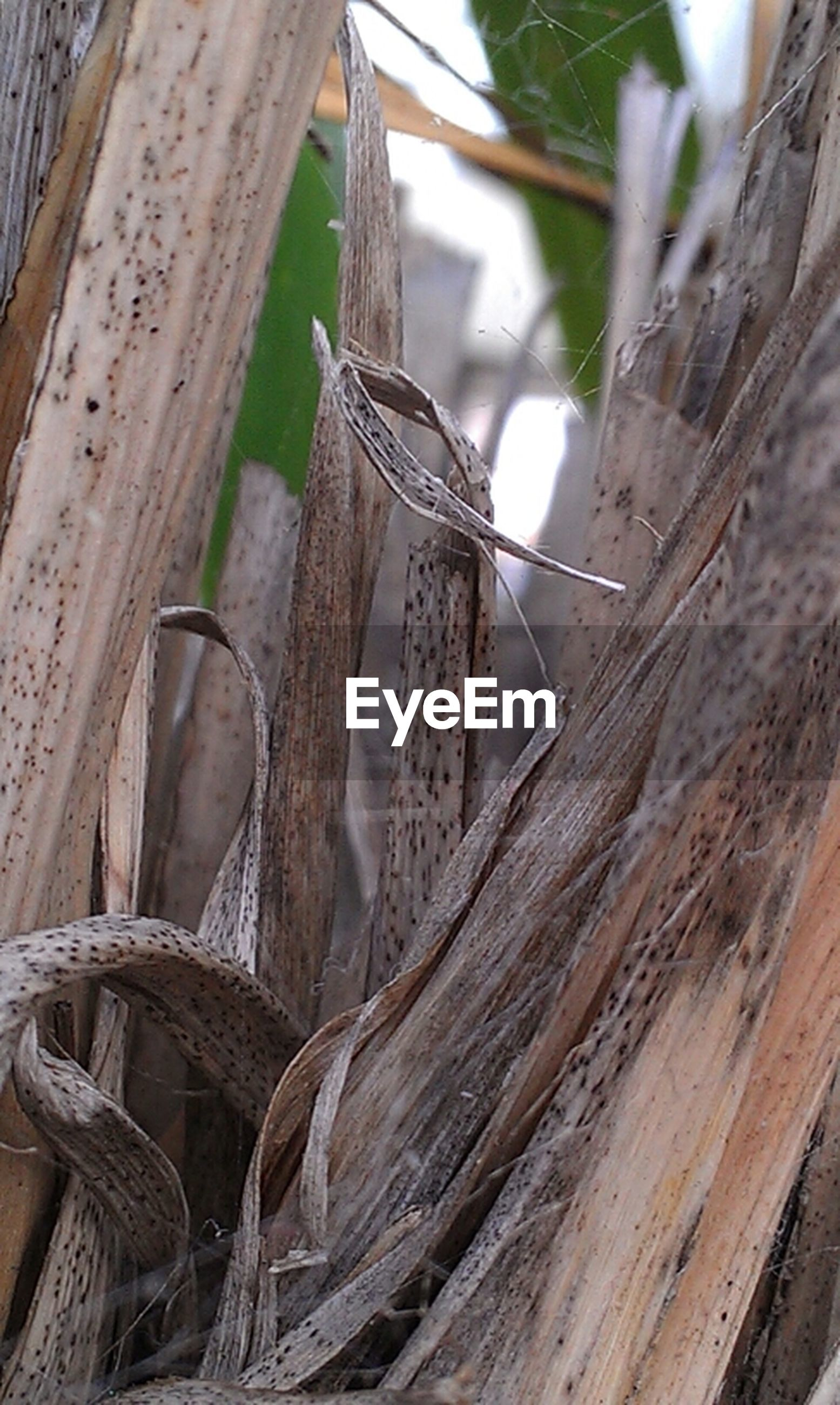 wood - material, close-up, wood, plant, day, wooden, growth, nature, textured, dry, no people, root, tree trunk, outdoors, focus on foreground, tree, brown, damaged, log, old