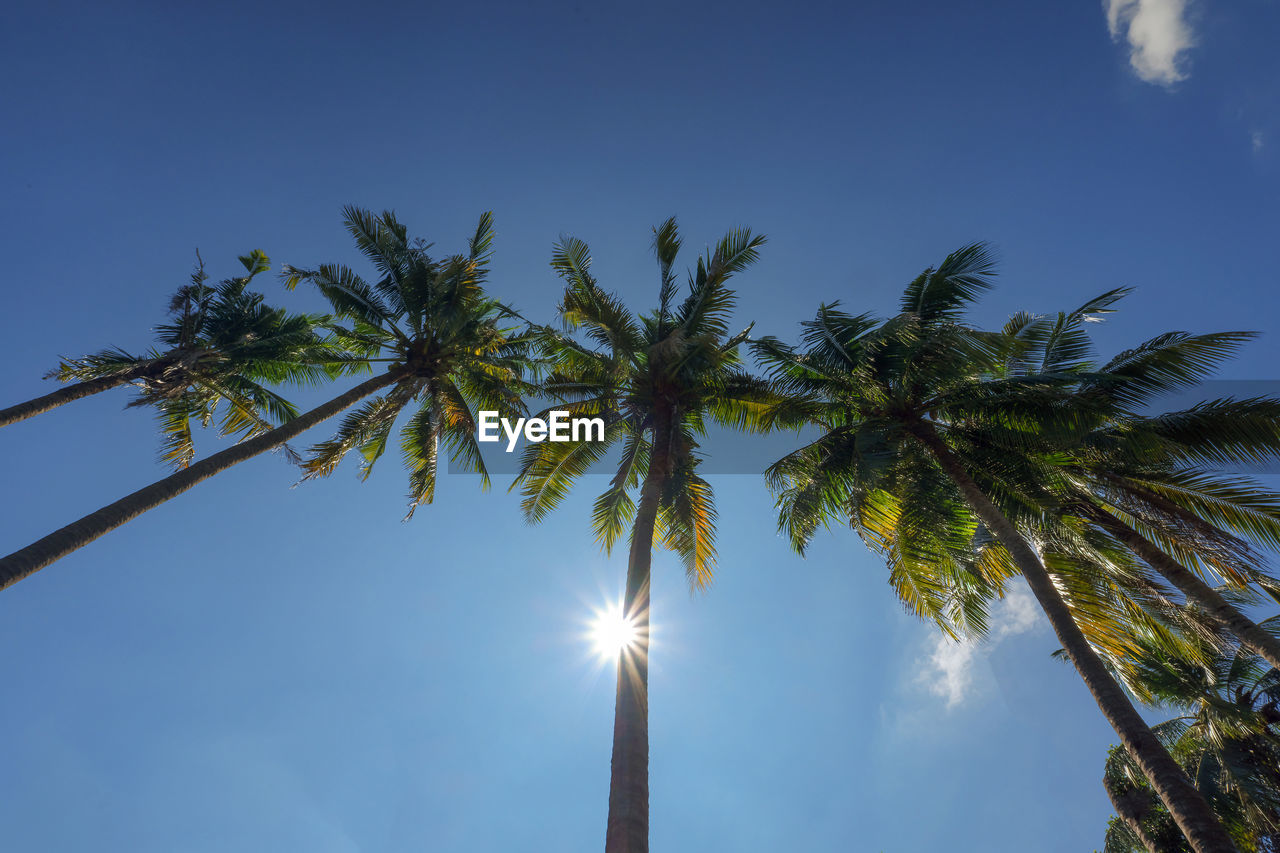 LOW ANGLE VIEW OF COCONUT PALM TREE AGAINST BRIGHT SUN