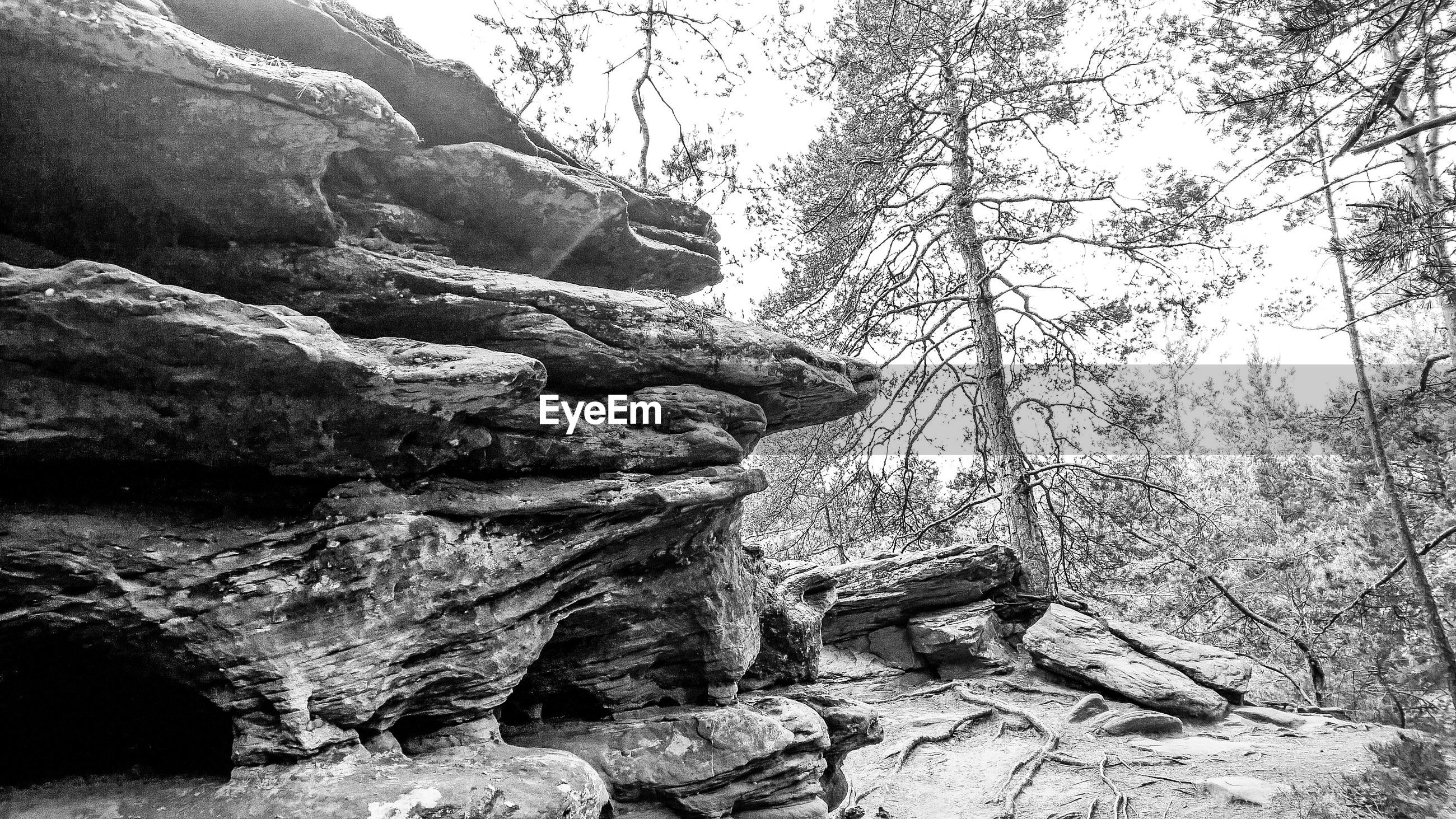 Rock formations by trees in forest