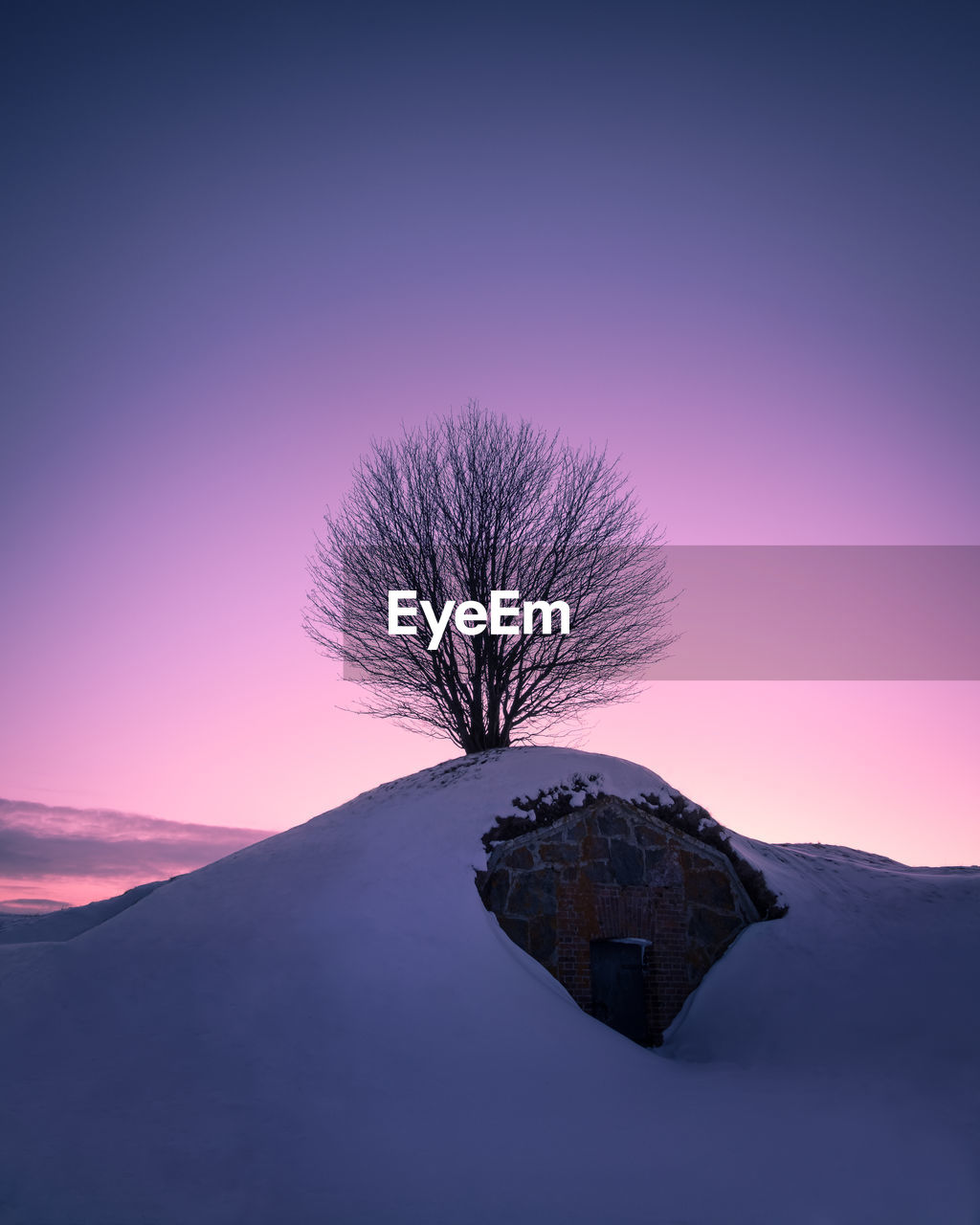 bare tree, beauty in nature, sunset, nature, tranquil scene, tranquility, landscape, outdoors, scenics, no people, snow, clear sky, cold temperature, silhouette, tree, sky, winter, lone, moon, branch, day, astronomy