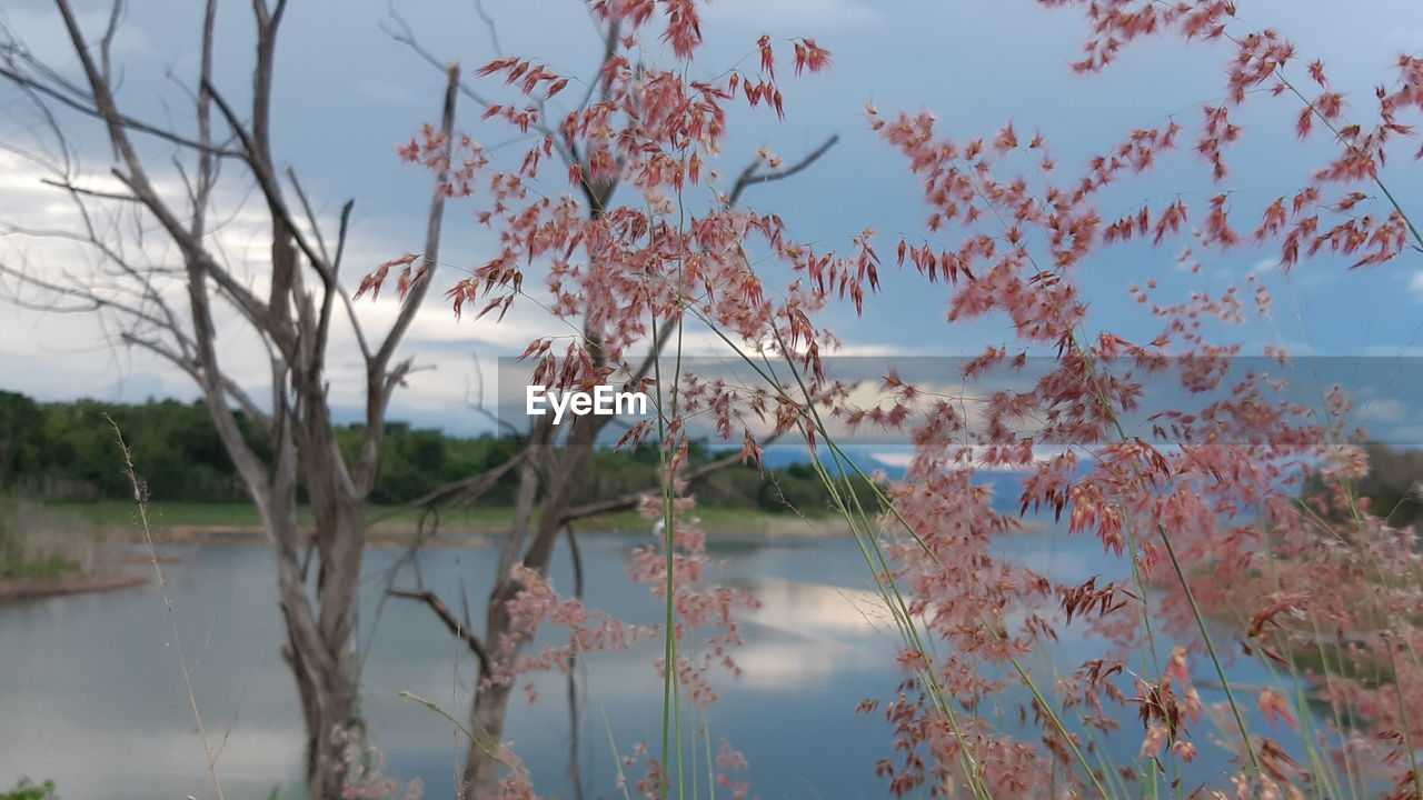 plant, water, sky, beauty in nature, tree, lake, tranquility, tranquil scene, nature, growth, no people, day, reflection, scenics - nature, outdoors, cloud - sky, non-urban scene, branch, focus on foreground