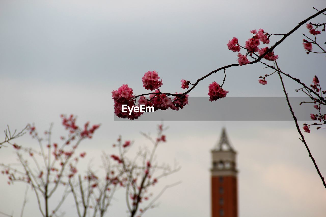 plant, architecture, building exterior, sky, flower, built structure, tree, flowering plant, fragility, nature, tower, building, growth, beauty in nature, branch, low angle view, blossom, no people, vulnerability, freshness, outdoors, springtime, cherry blossom, cherry tree