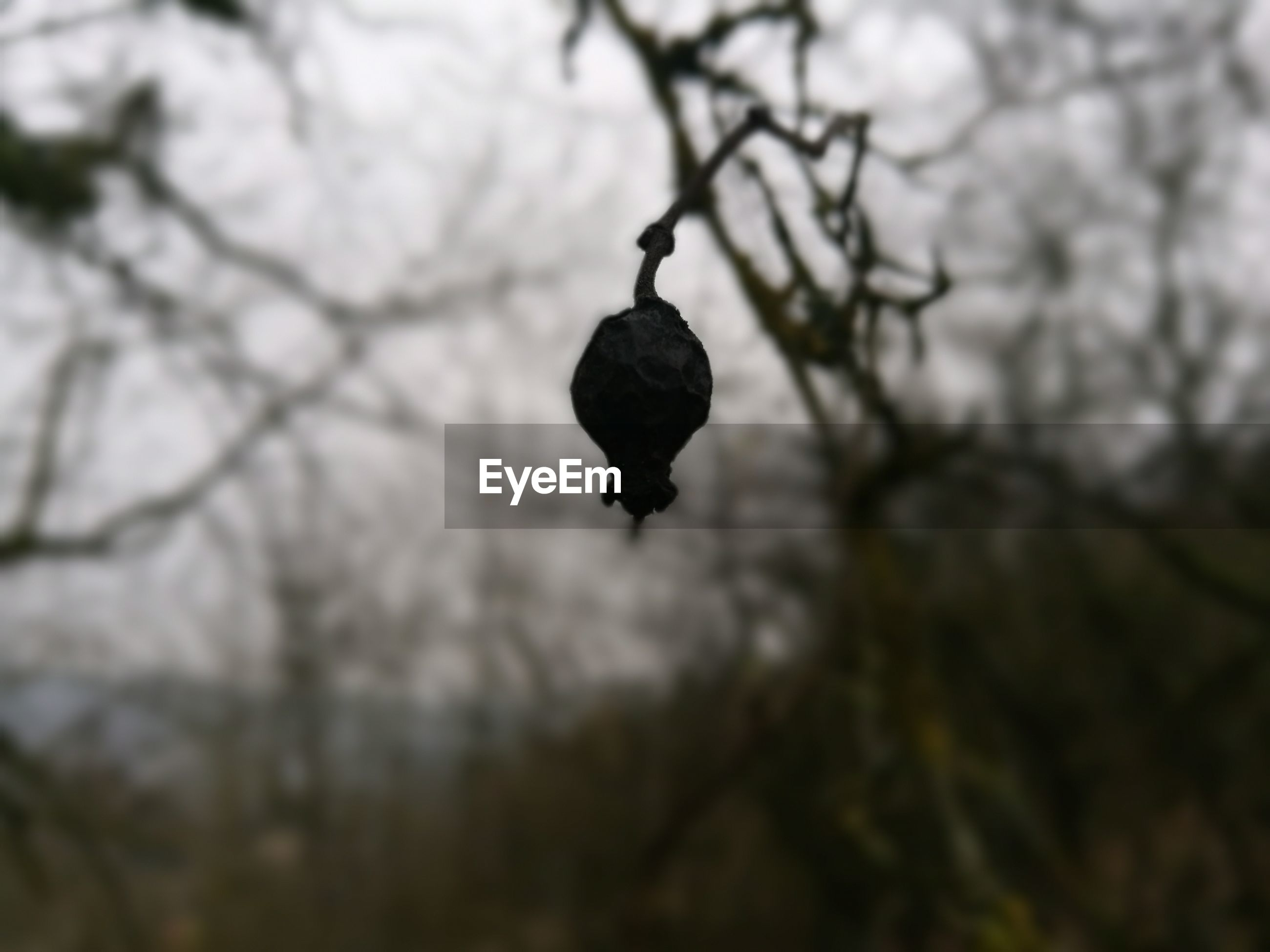 tree, branch, low angle view, hanging, nature, no people, close-up, outdoors, bare tree, beauty in nature, sky, day