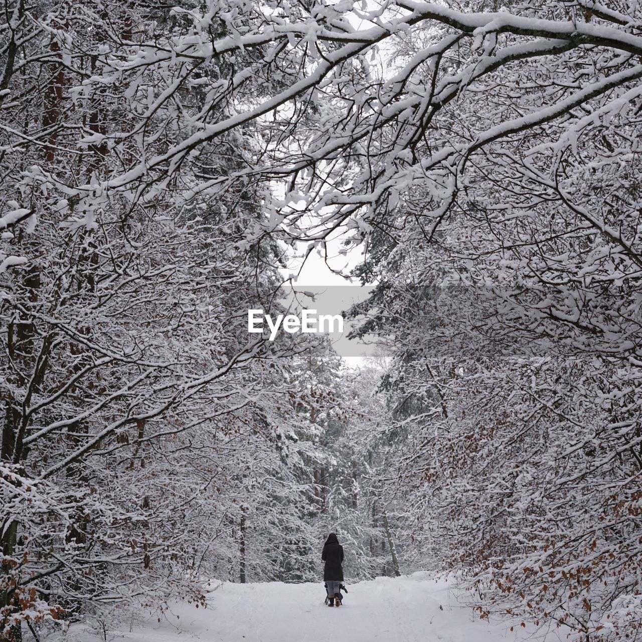 winter, snow, cold temperature, weather, nature, tree, walking, rear view, beauty in nature, full length, real people, bare tree, branch, leisure activity, tranquility, day, outdoors, warm clothing, one person, landscape, men, snowing, people