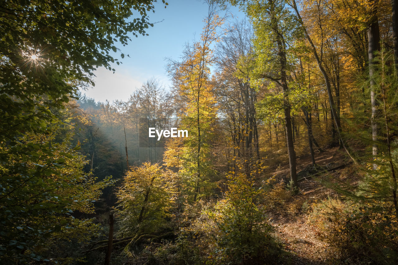 plant, tree, forest, land, nature, autumn, growth, tranquility, beauty in nature, day, tranquil scene, no people, non-urban scene, sky, scenics - nature, sunlight, change, outdoors, environment, landscape, woodland