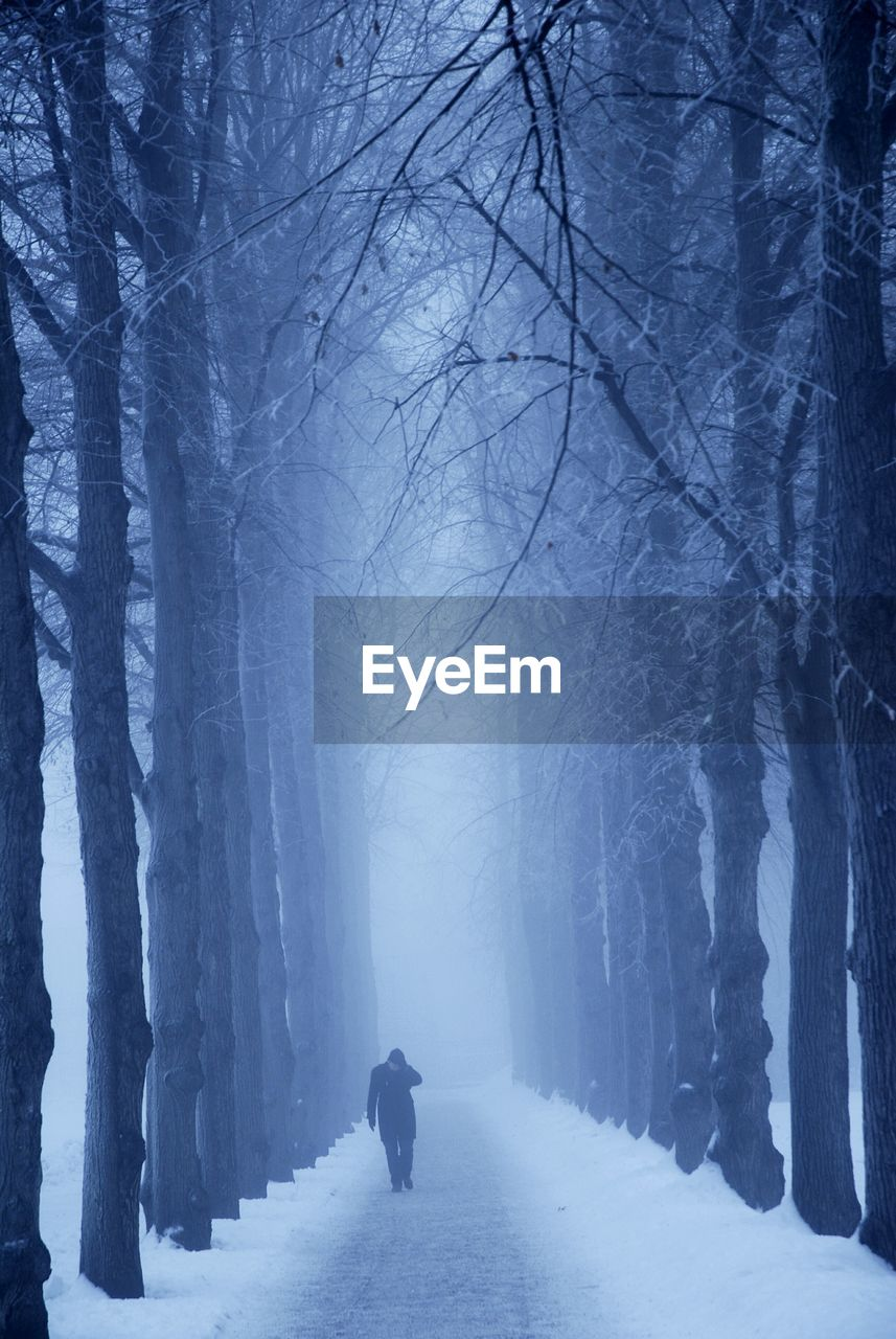 winter, cold temperature, snow, tree, bare tree, plant, real people, fog, nature, beauty in nature, one person, land, direction, full length, rear view, walking, tranquility, forest, lifestyles, warm clothing, outdoors, extreme weather, woodland