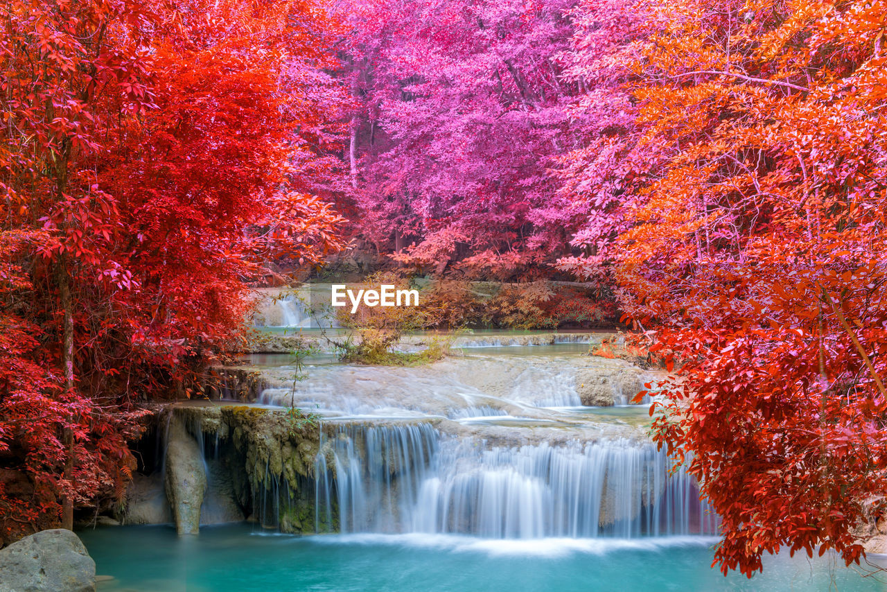 plant, tree, autumn, water, change, beauty in nature, scenics - nature, nature, waterfall, motion, day, forest, no people, growth, waterfront, tranquil scene, flowing water, outdoors, idyllic