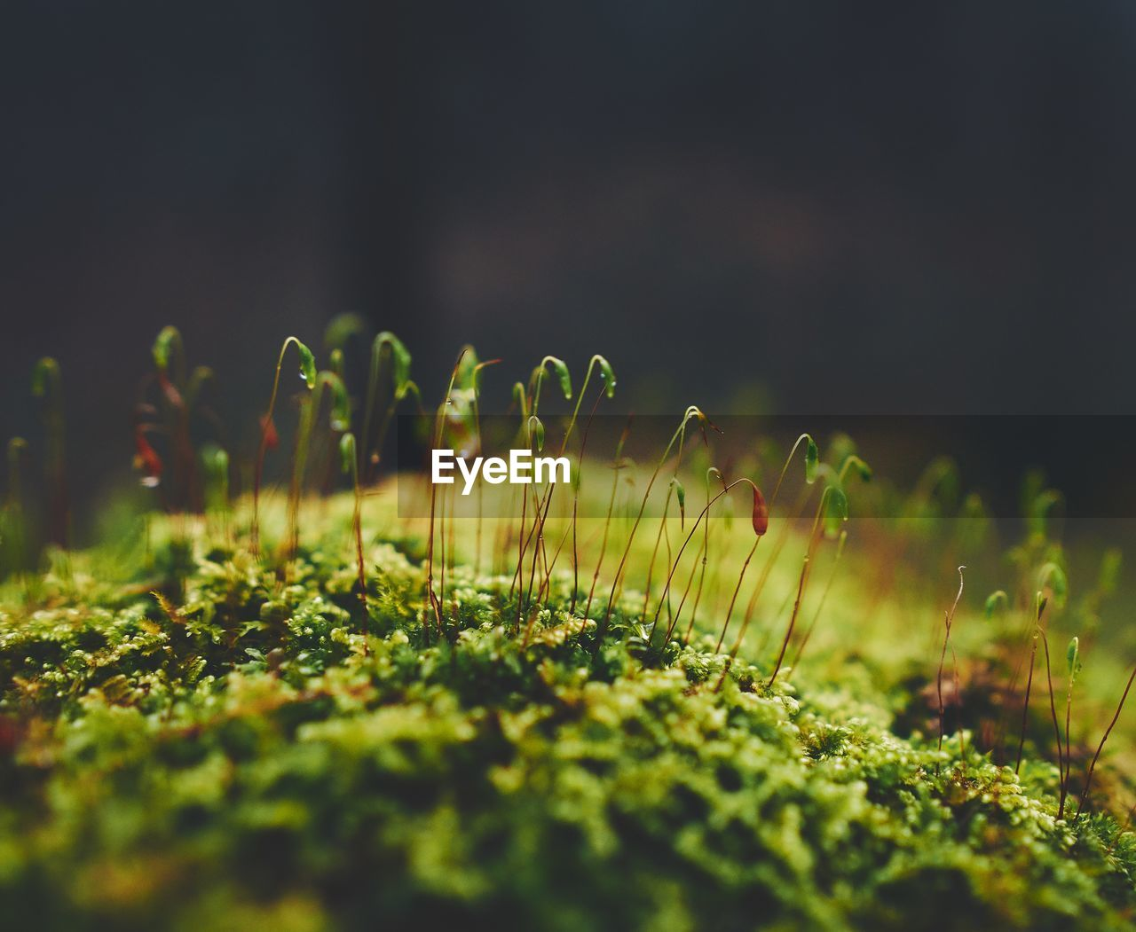 selective focus, plant, growth, land, nature, beauty in nature, green color, close-up, field, vulnerability, fragility, no people, tranquility, freshness, outdoors, day, grass, moss, flower, surface level