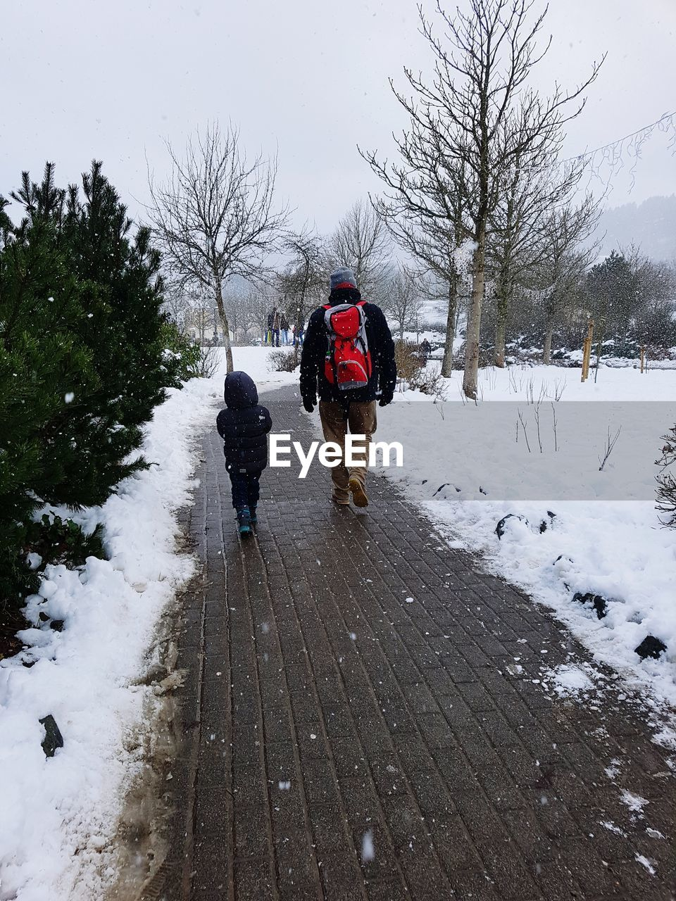 snow, winter, cold temperature, tree, real people, warm clothing, men, nature, two people, rear view, plant, full length, lifestyles, day, clothing, leisure activity, togetherness, women, white color, outdoors, snowing