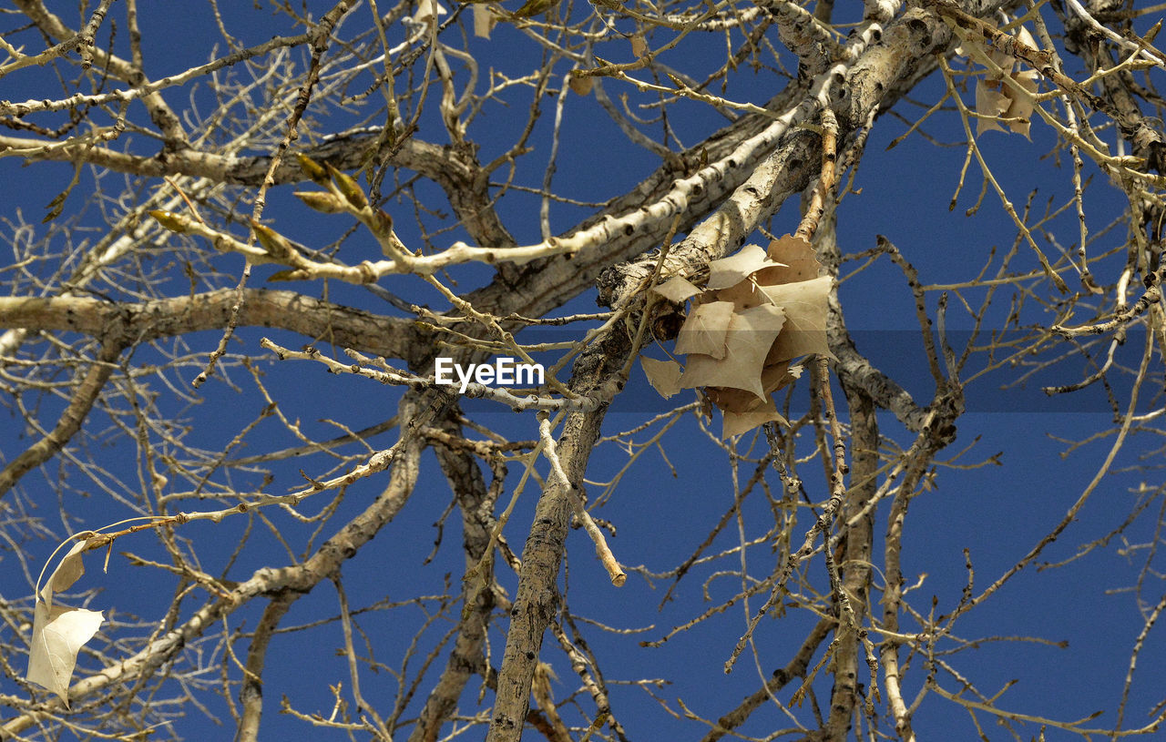 branch, tree, bare tree, no people, dead plant, low angle view, day, nature, outdoors, blue, sky, close-up