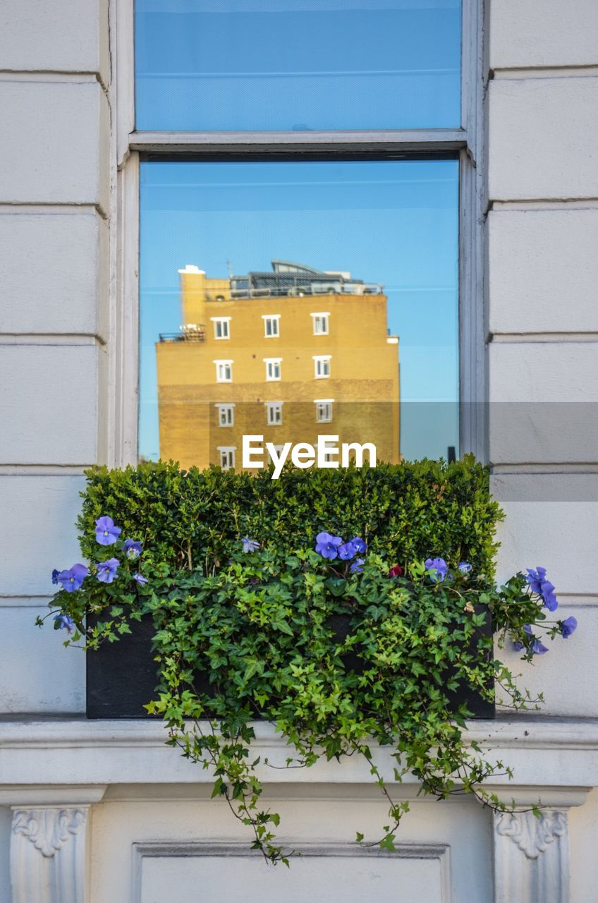 architecture, building exterior, building, growth, built structure, window, plant, flower, no people, yellow, outdoors, nature, day, blooming, window box, clear sky, city