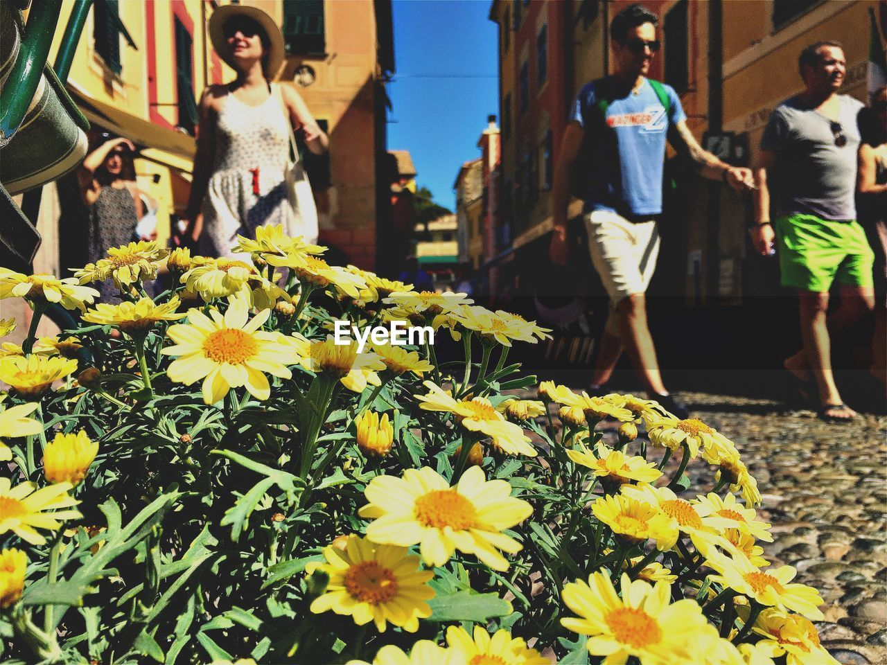 flower, fragility, day, freshness, yellow, outdoors, petal, nature, beauty in nature, real people, flower head, growth, women, sunlight, sunflower, lifestyles, plant, one person, flower market, men, close-up, young women, people