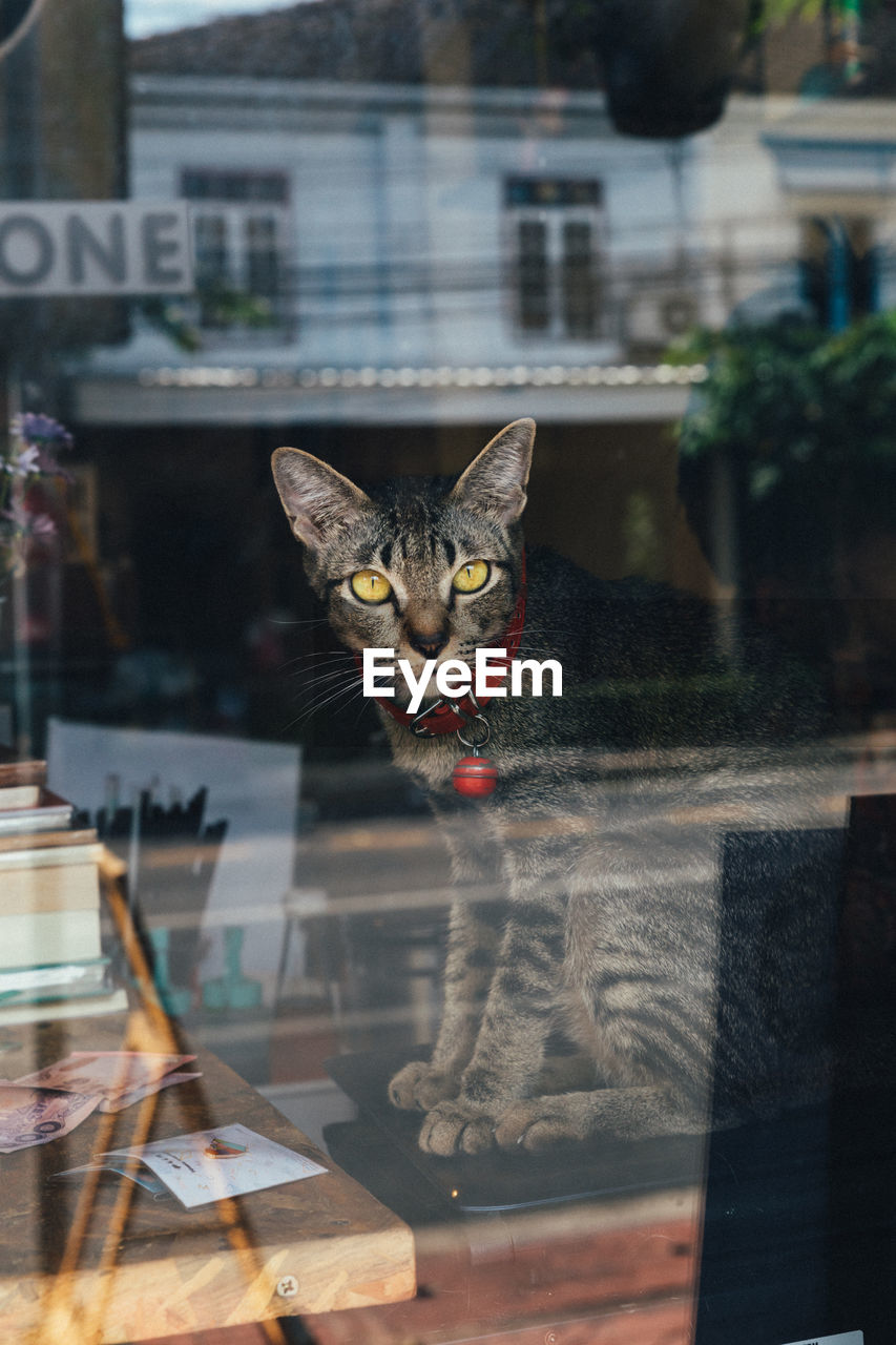 pets, domestic, domestic animals, animal themes, cat, feline, domestic cat, animal, one animal, mammal, glass - material, vertebrate, window, portrait, no people, focus on foreground, reflection, looking at camera, looking, transparent, whisker
