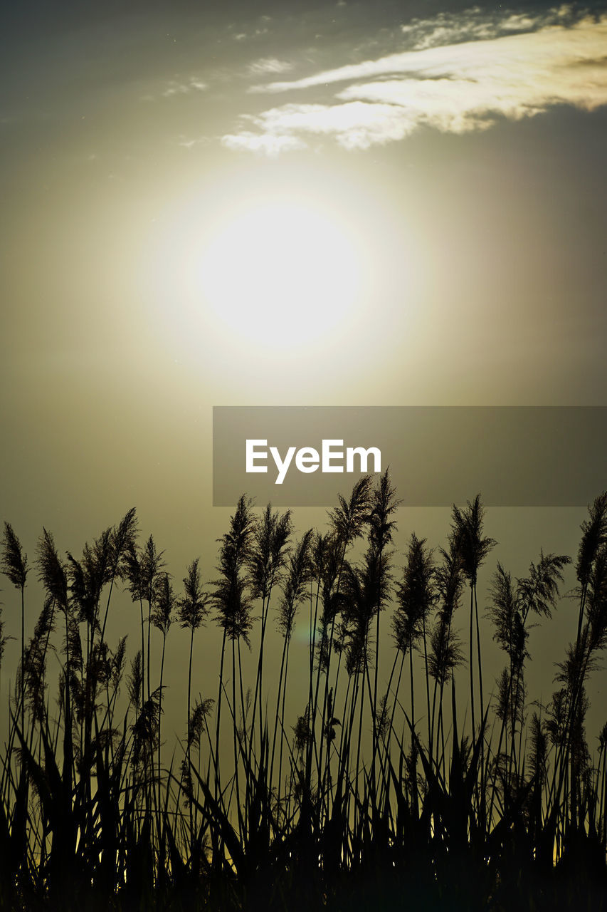 sun, beauty in nature, nature, sky, scenics, tranquil scene, tranquility, sunset, outdoors, moon, low angle view, no people, growth, sunlight, silhouette, natural phenomenon, landscape, tree, day, astronomy, close-up