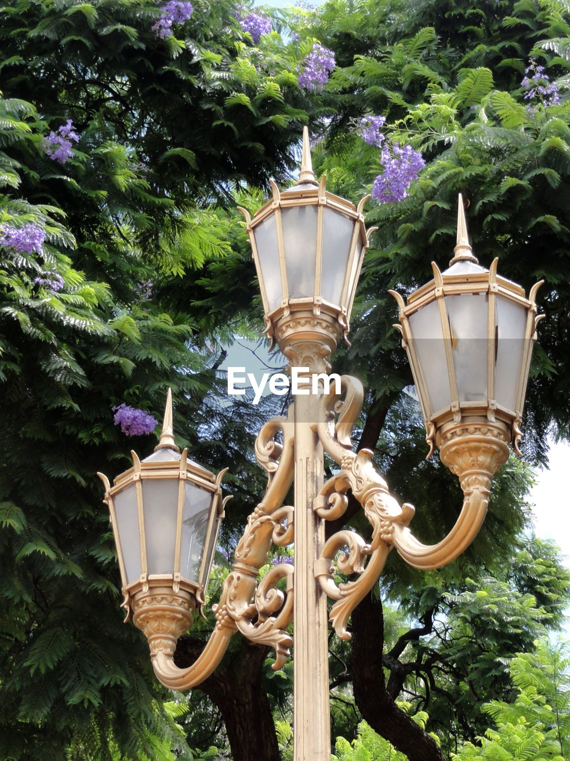 Low angle view of lamp post against tree