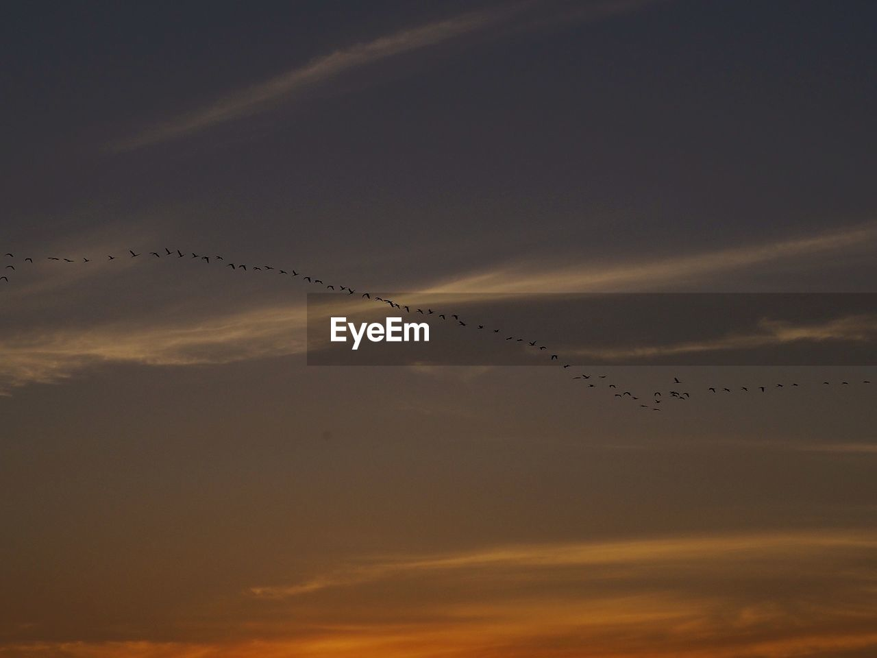 sunset, sky, cloud - sky, bird, flying, beauty in nature, animal themes, animal wildlife, group of animals, vertebrate, animal, animals in the wild, silhouette, large group of animals, flock of birds, tranquil scene, tranquility, orange color, scenics - nature, low angle view, no people