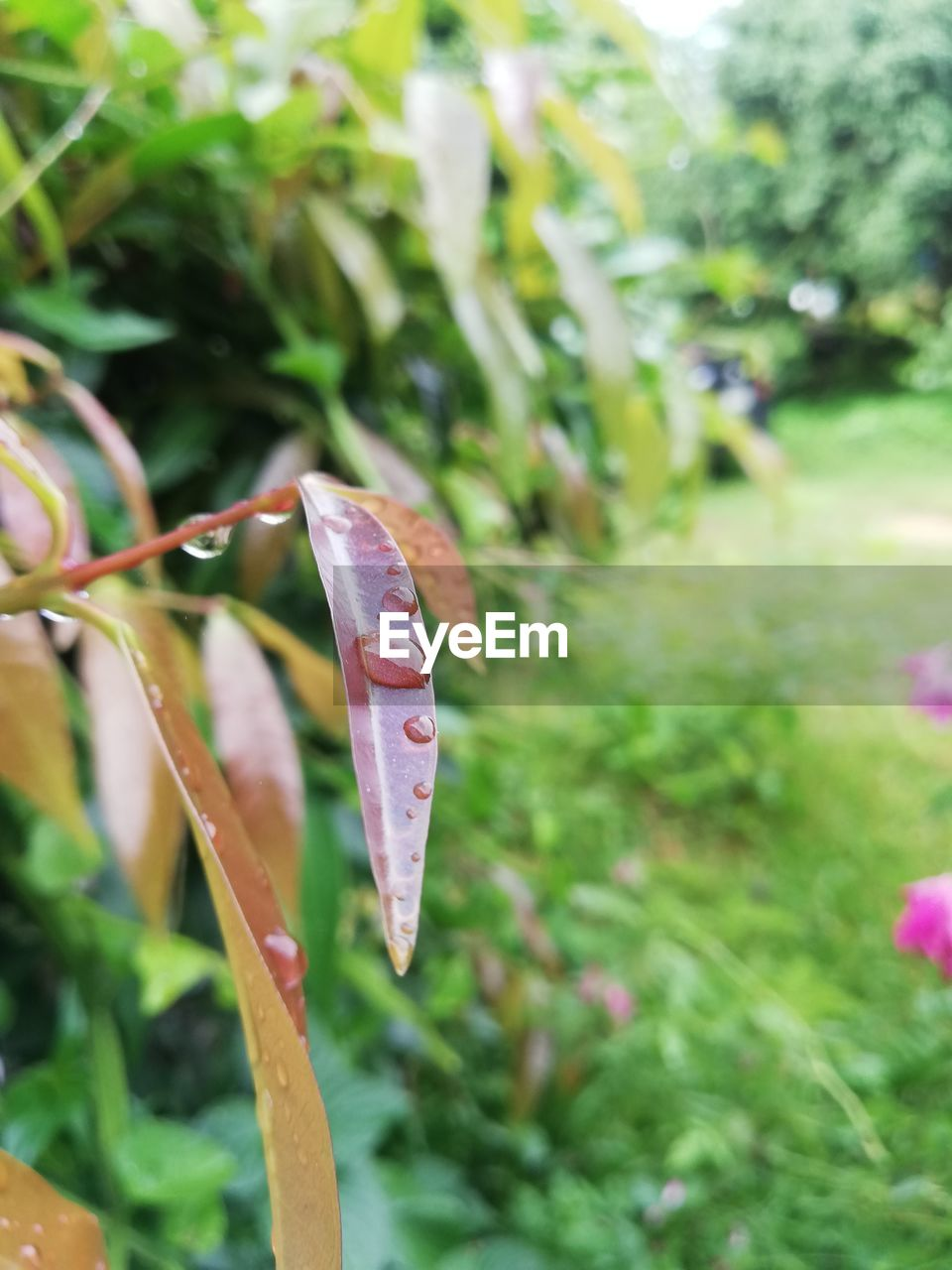 plant, growth, close-up, day, beauty in nature, focus on foreground, nature, no people, green color, grass, flower, pink color, fragility, vulnerability, outdoors, selective focus, leaf, plant part, freshness, field, blade of grass