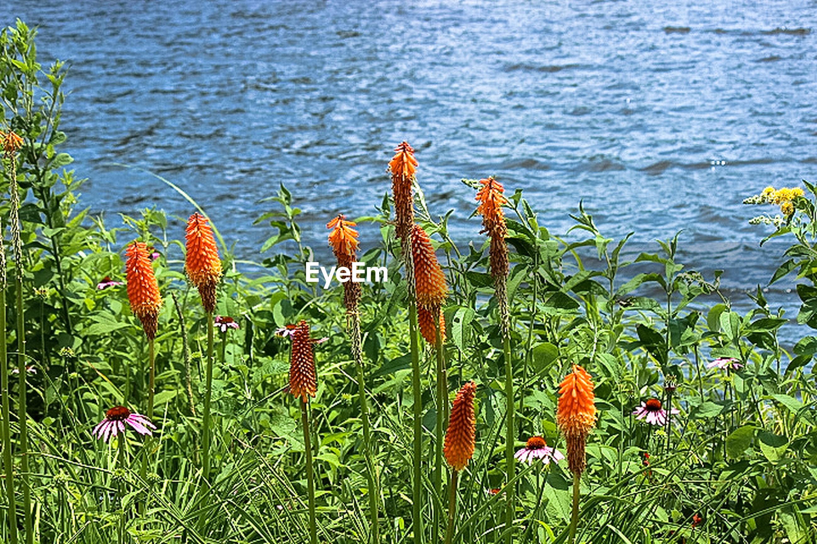 FLOWERS GROWING IN PARK