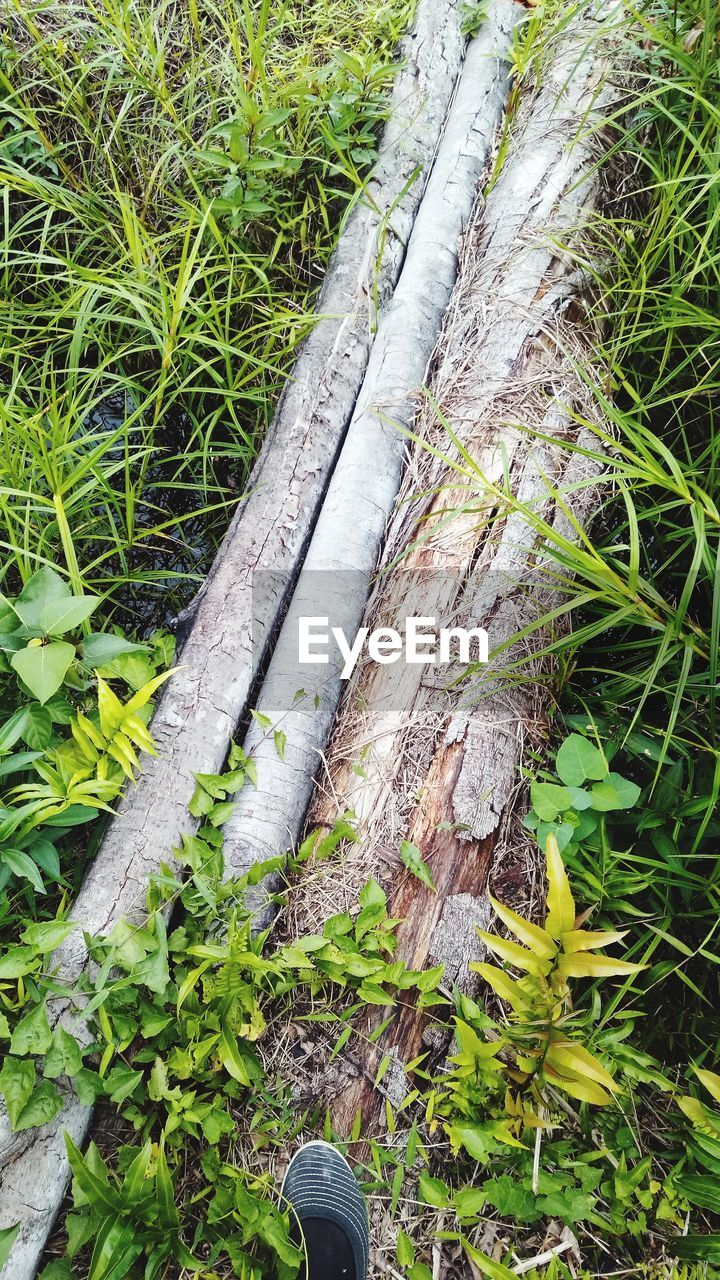 plant, growth, green color, nature, grass, plant part, tree, leaf, day, land, close-up, no people, high angle view, wood - material, outdoors, tree trunk, wood, tranquility, field, trunk, bamboo - plant