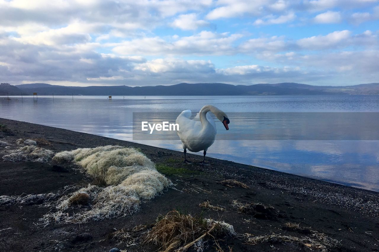 water, bird, vertebrate, animals in the wild, animal, animal themes, cloud - sky, sky, animal wildlife, one animal, lake, beauty in nature, scenics - nature, nature, day, beach, mountain, solid, rock, no people